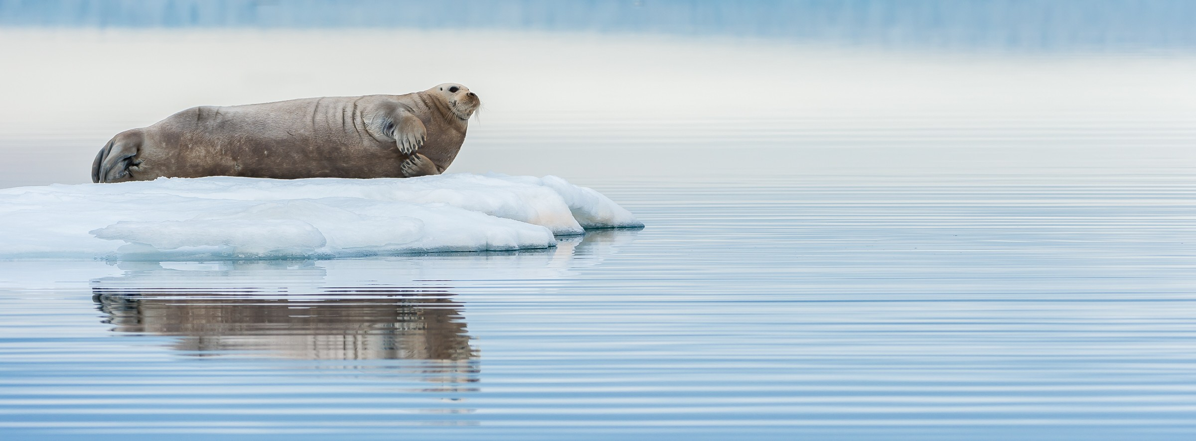 wildlife artic 8166