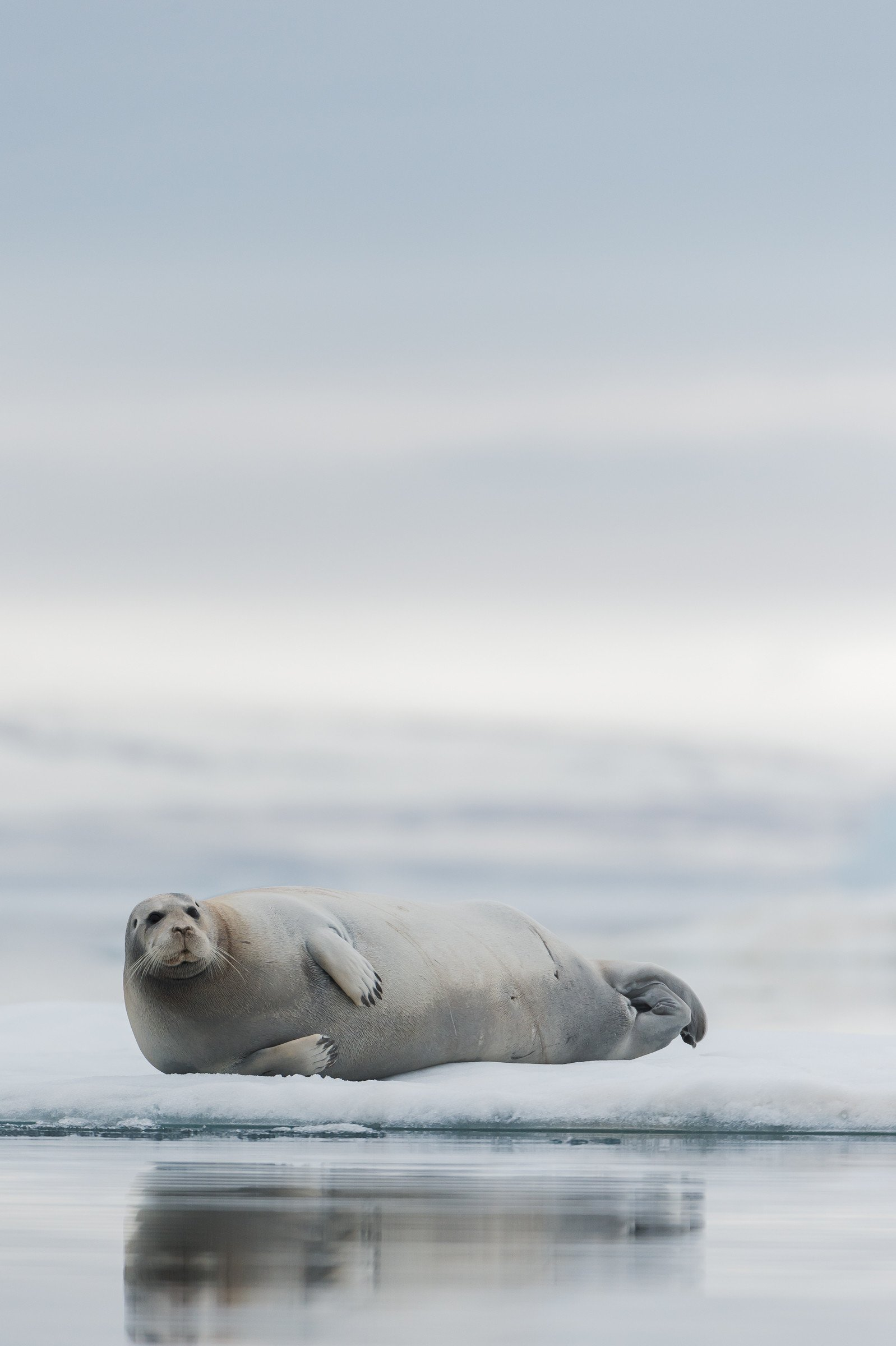 wildlife artic 8252