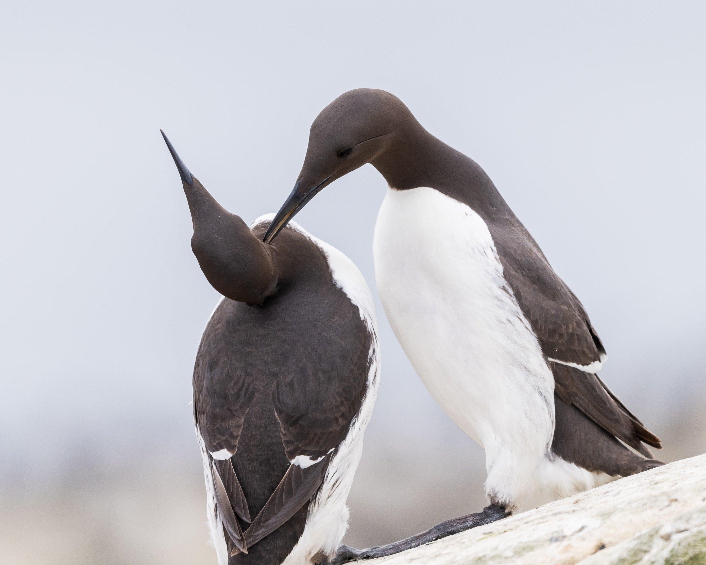vogels farne 3464