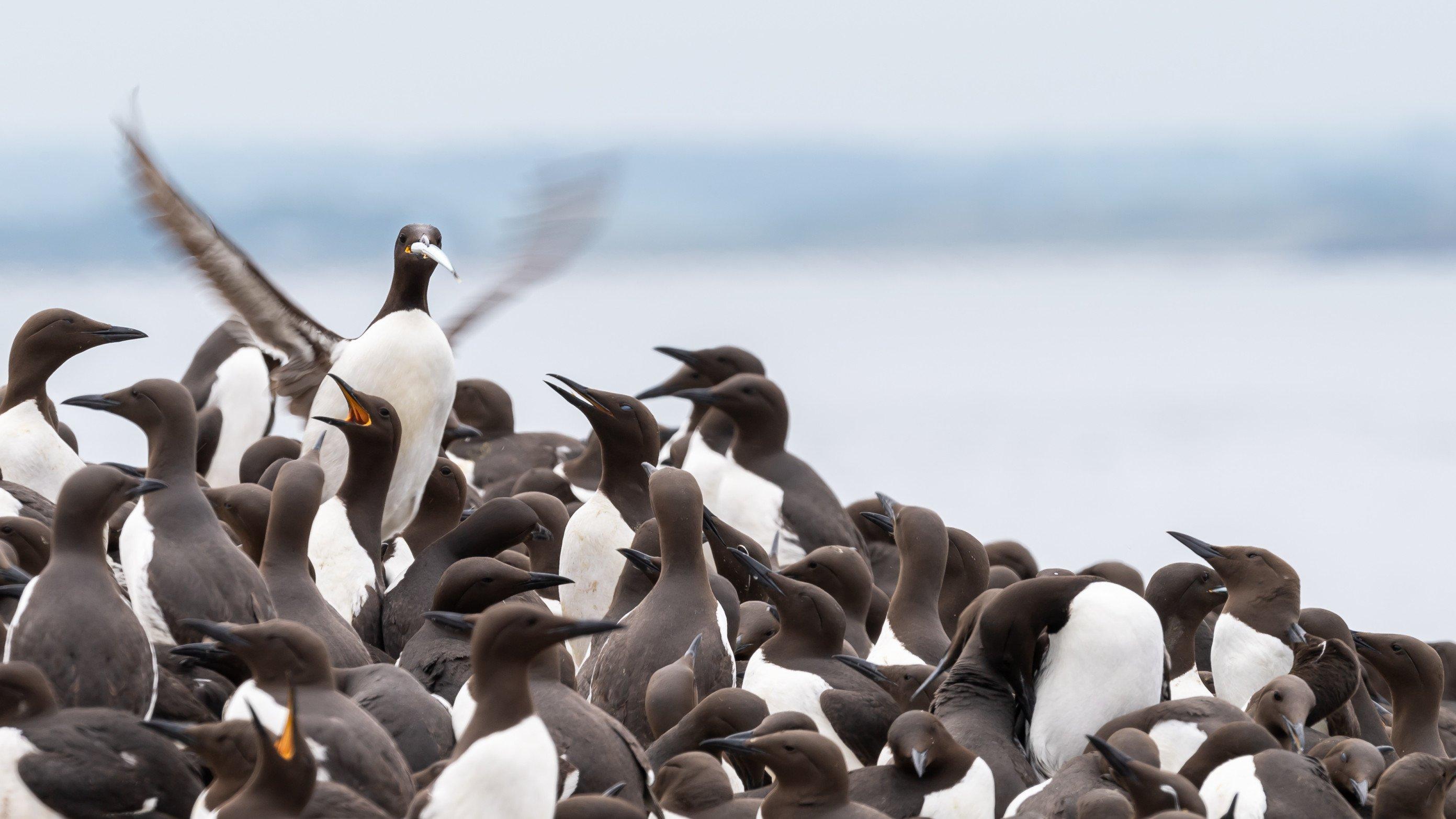 vogels farne 3666