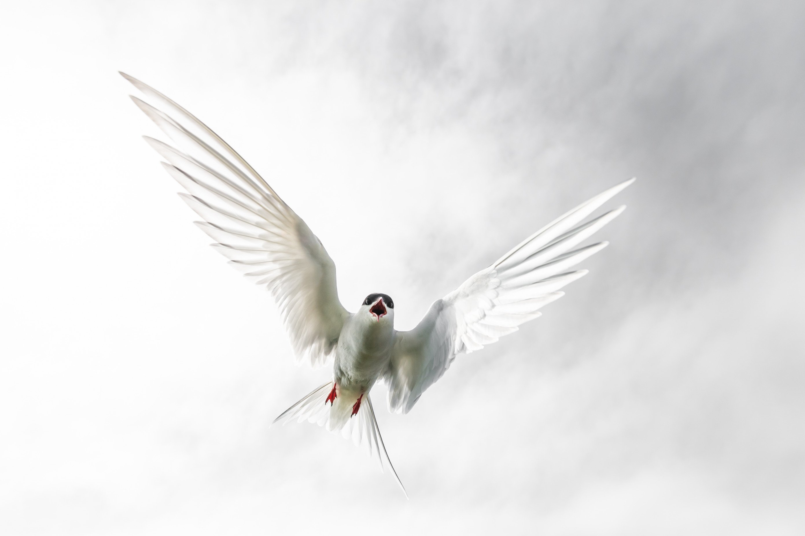 vogels farne 4332