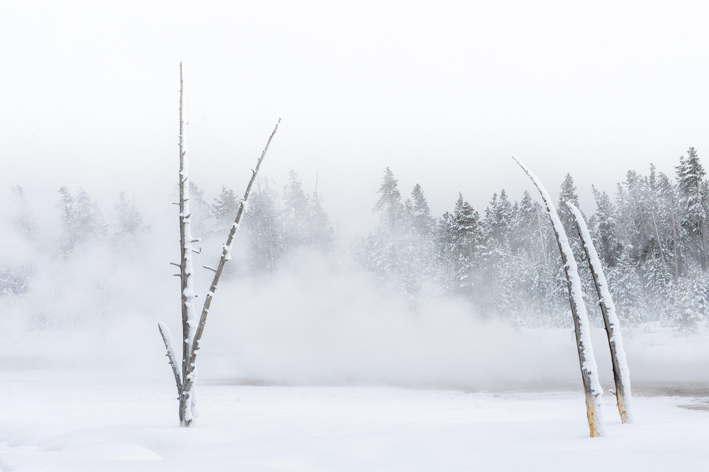 Yellowstone 0265