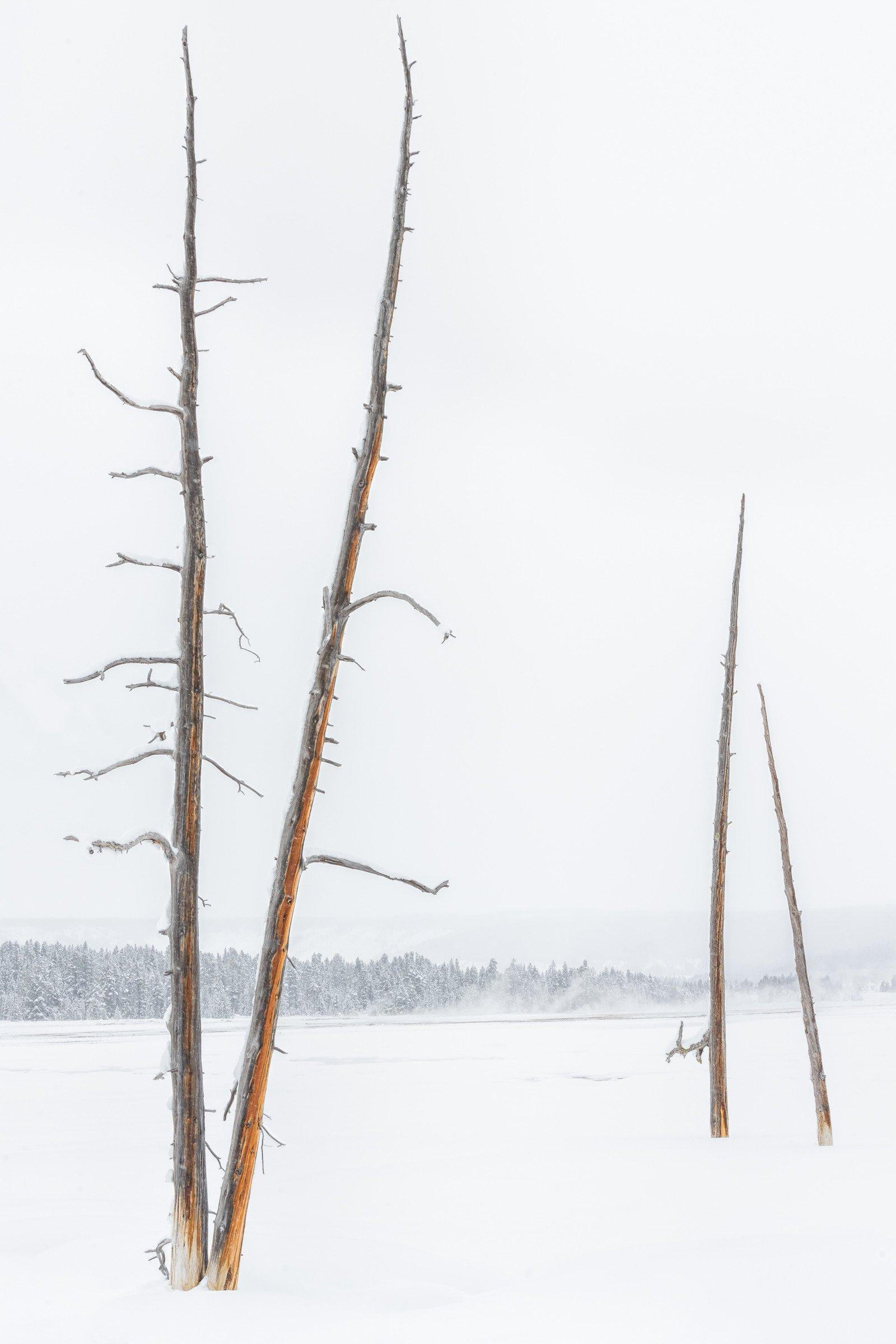 Yellowstone 0340