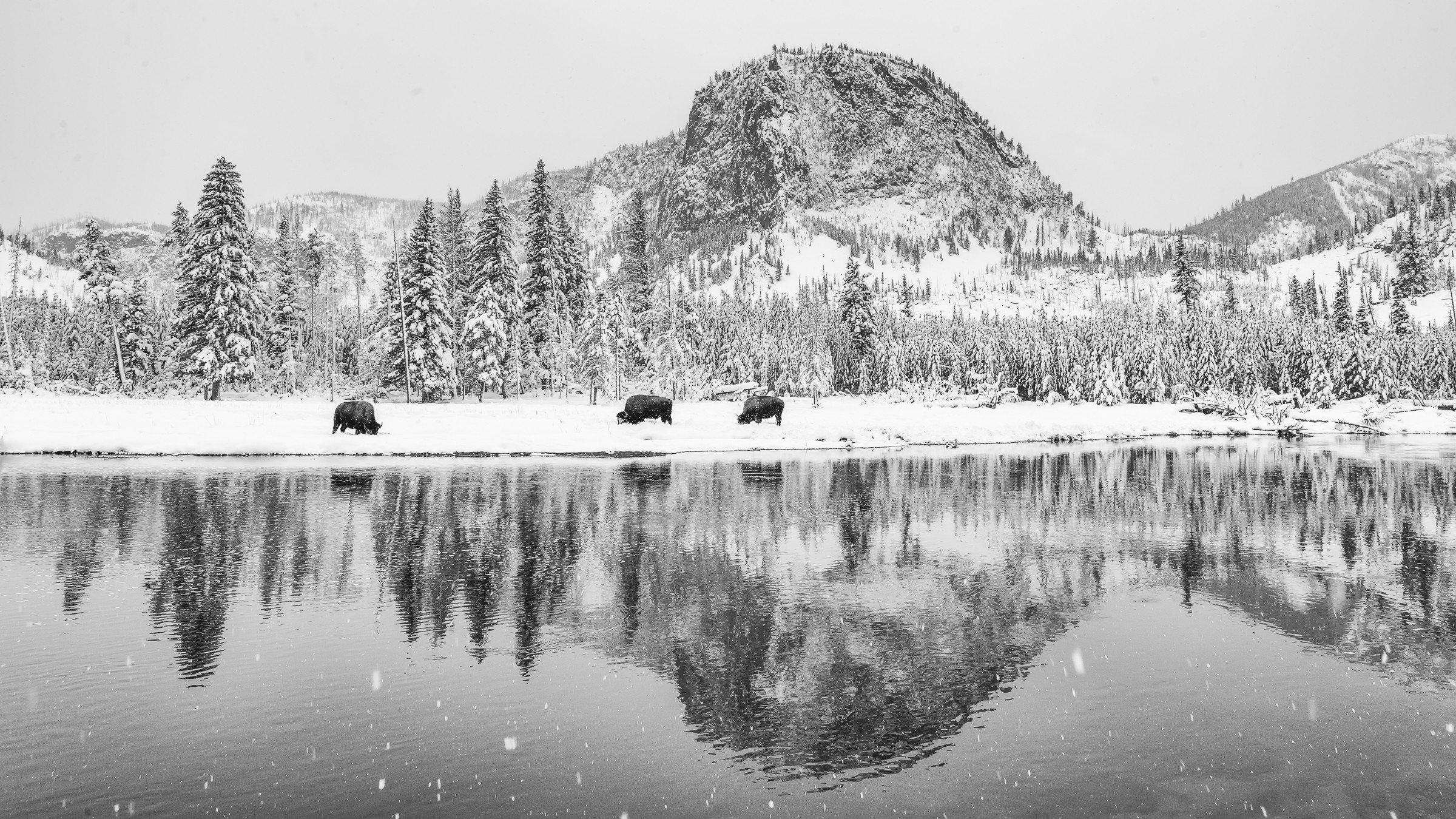 Yellowstone 0356