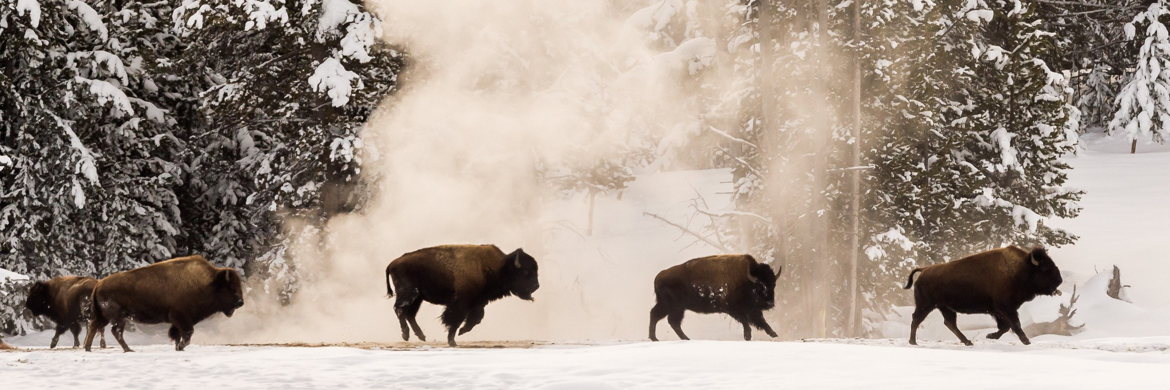 Yellowstone 6038