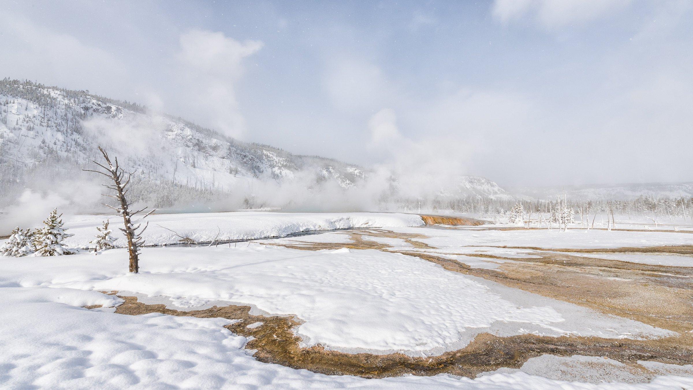 Yellowstone 9831