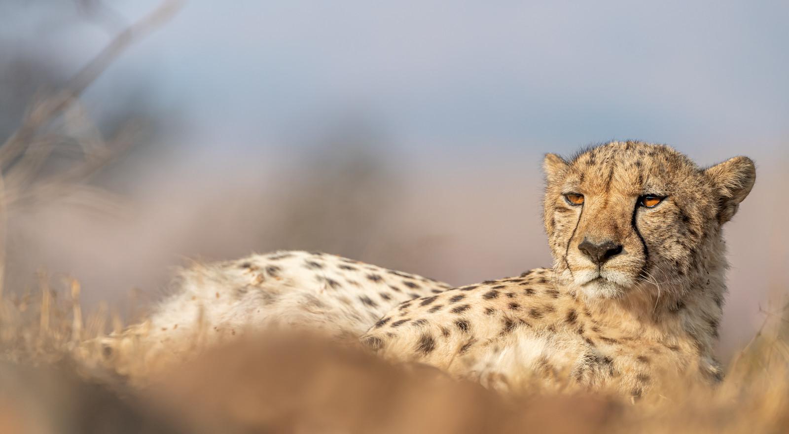 Zuid-Afrika-3.jpg