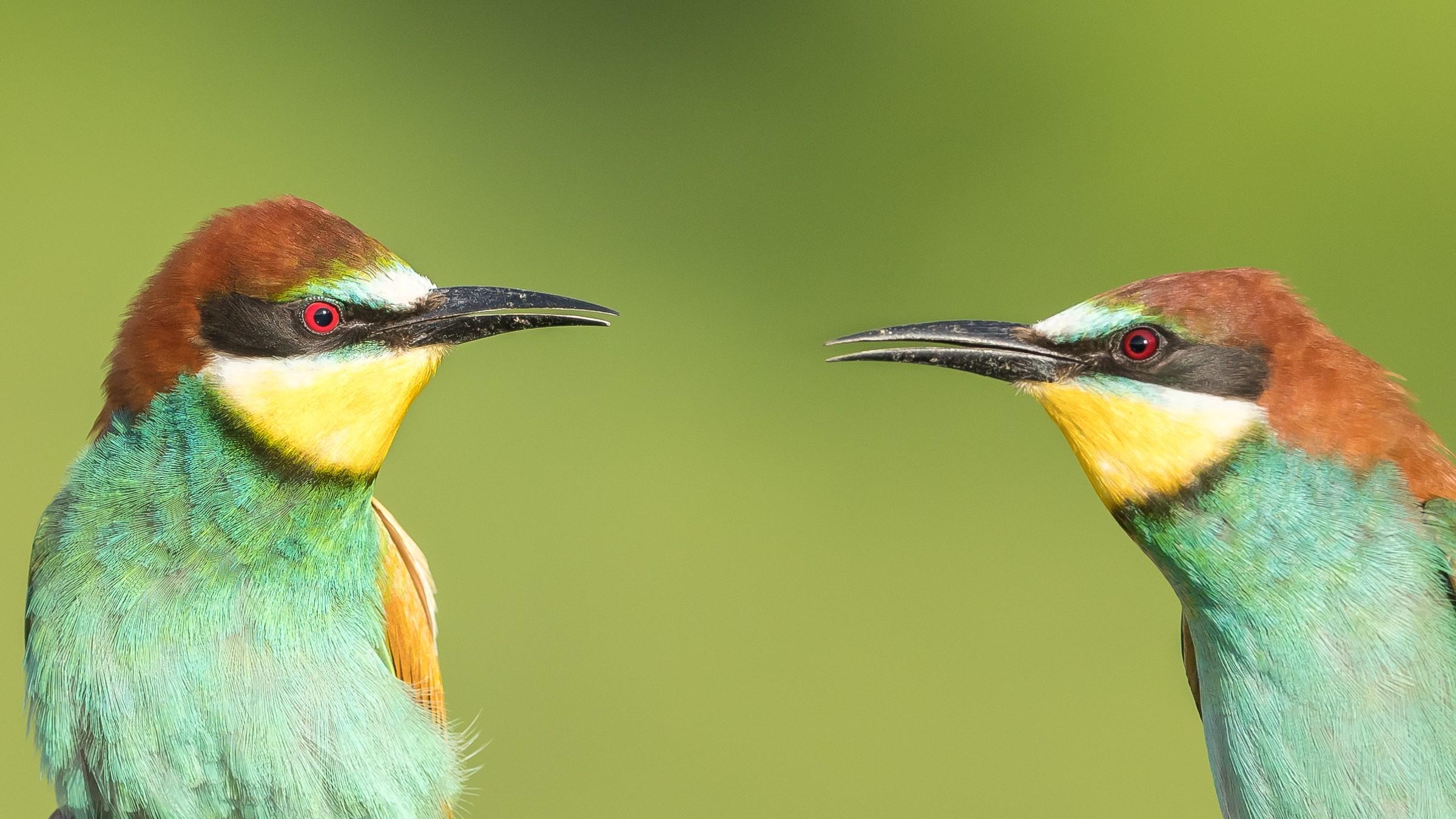 vogels bos 5999