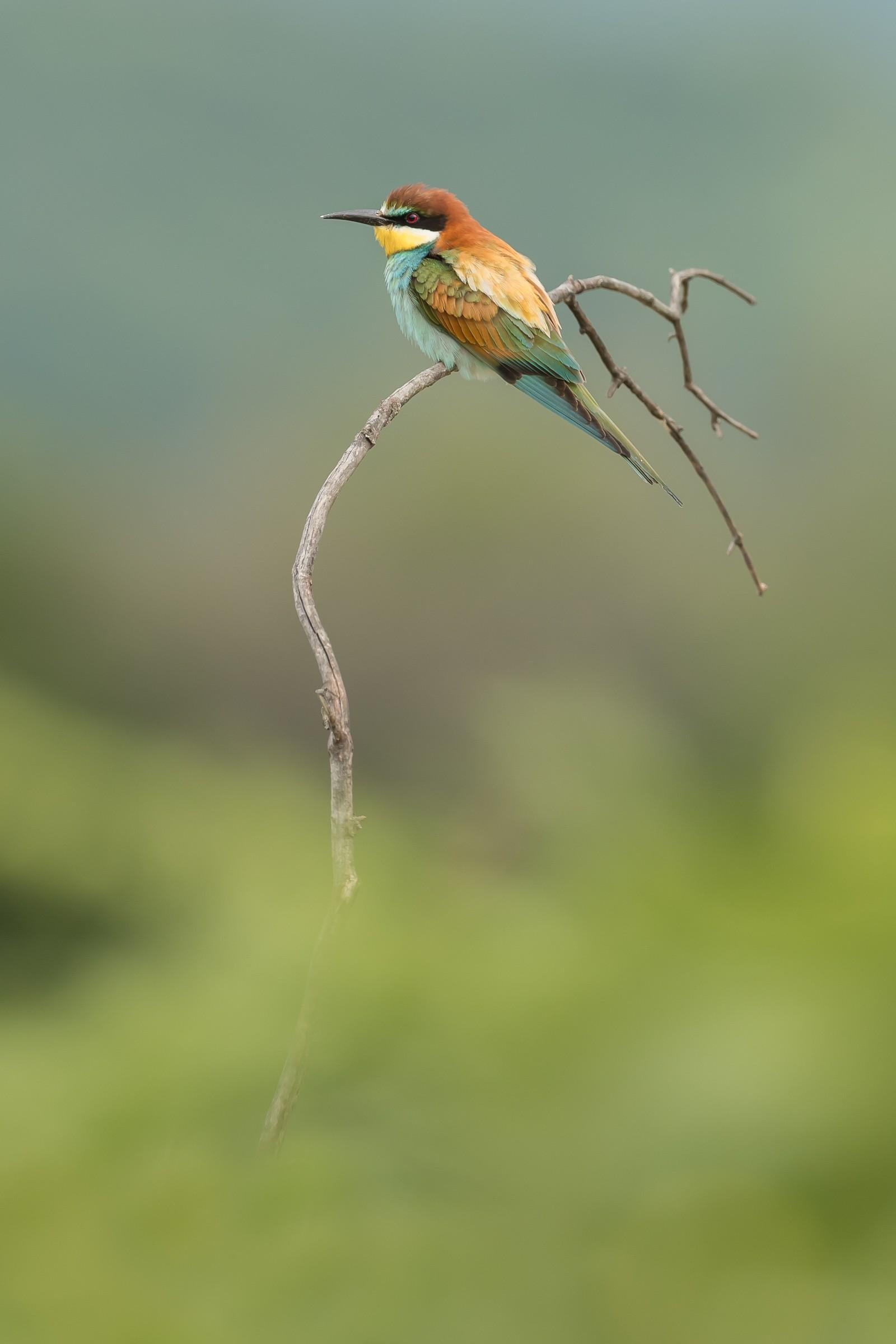 vogels bos 6437