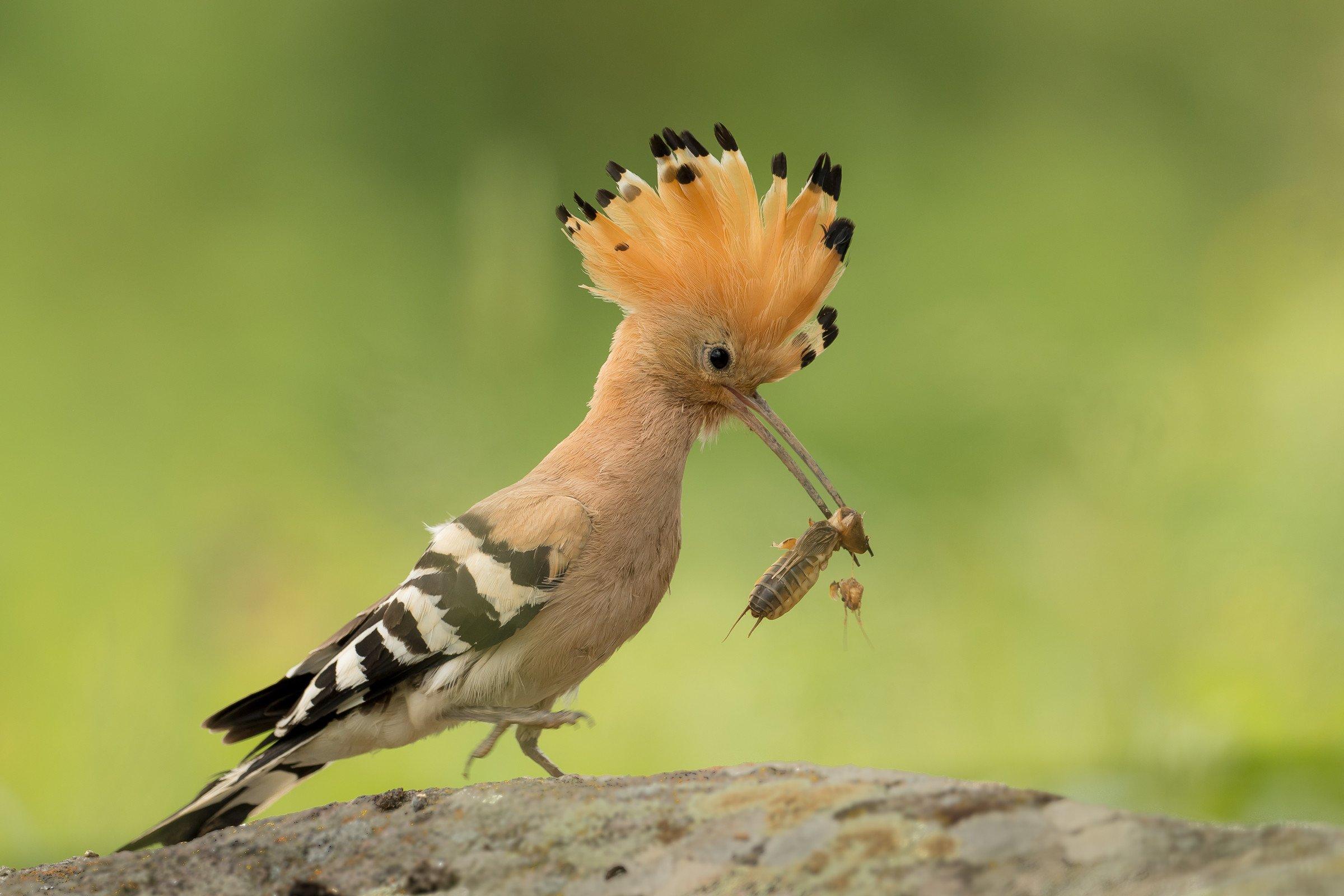 vogels bos 6940