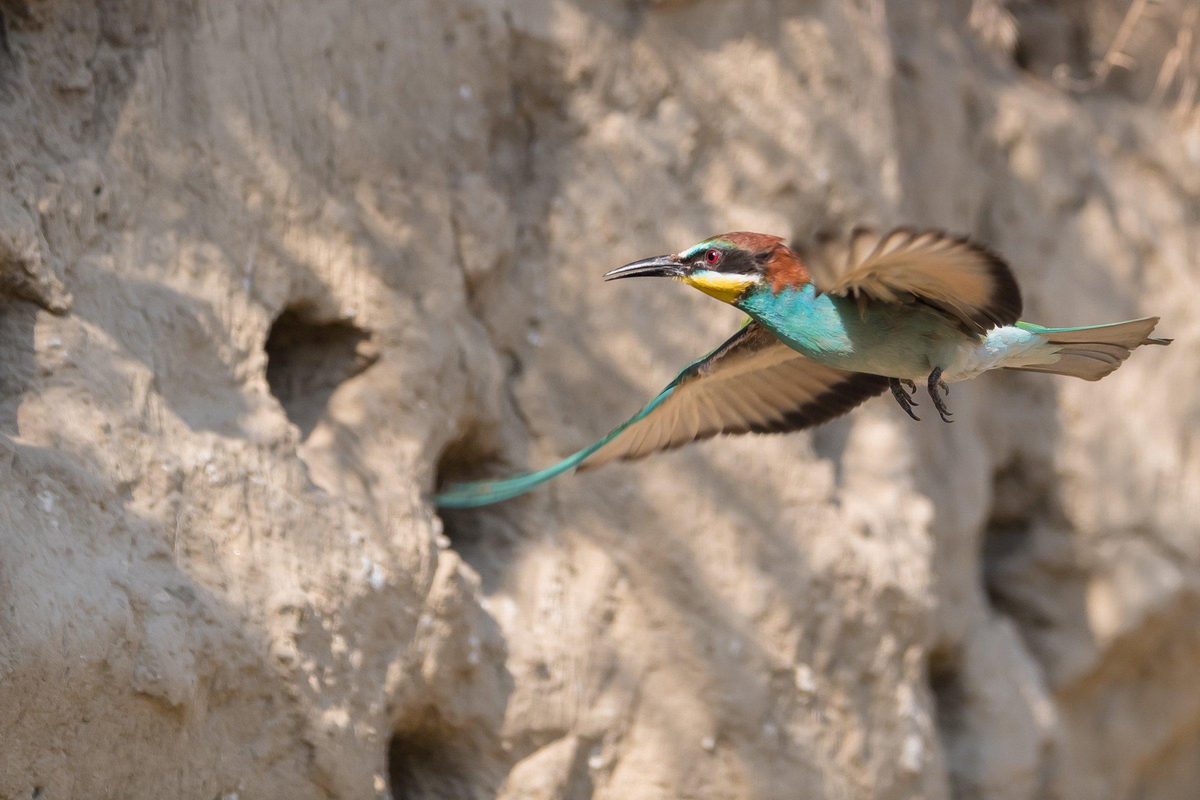 vogels bos 0655