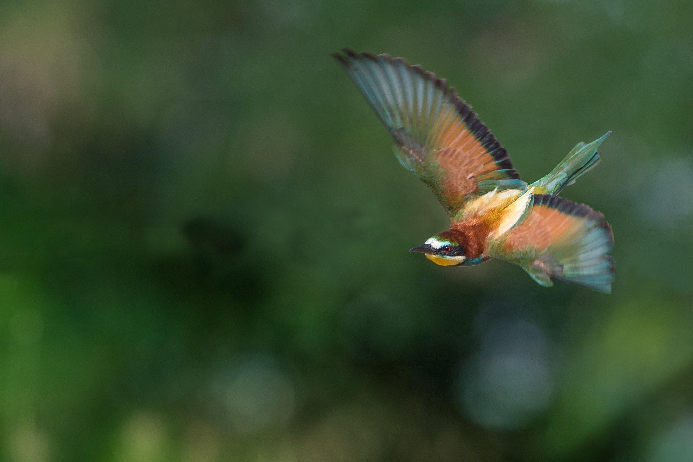 vogels bos 0700