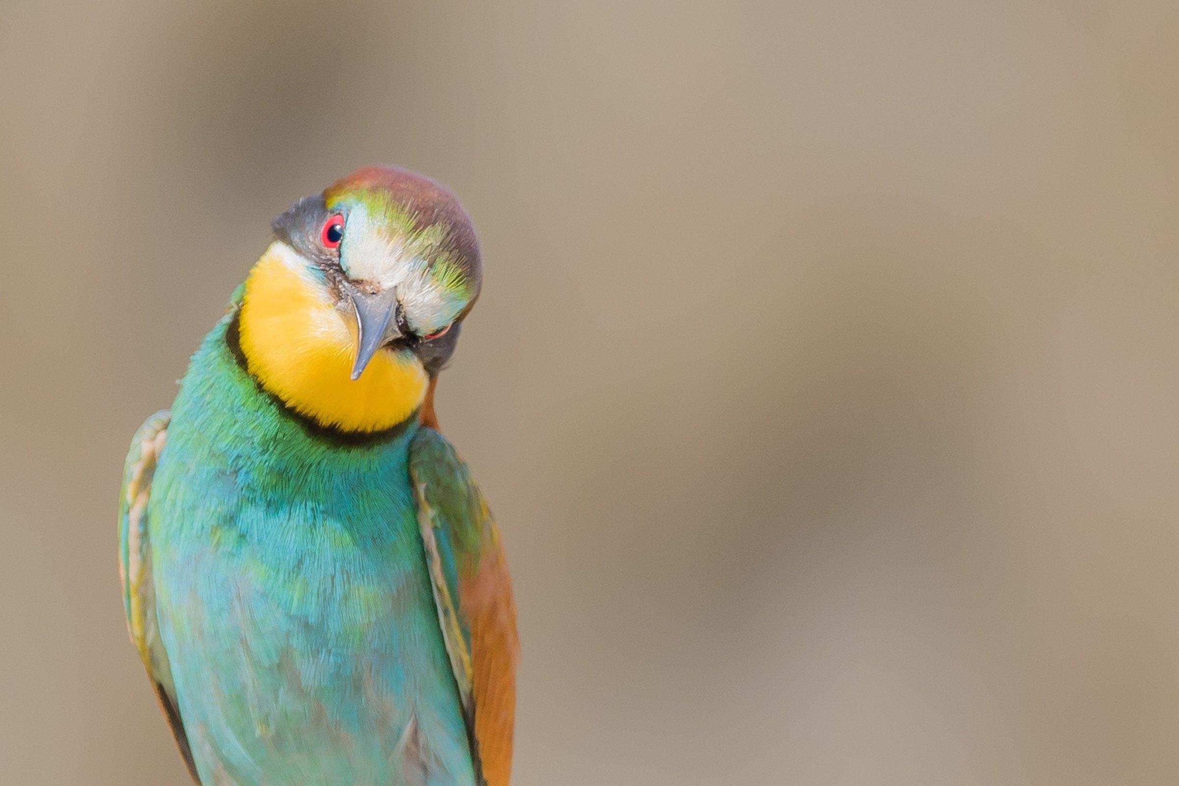vogels bos 0962