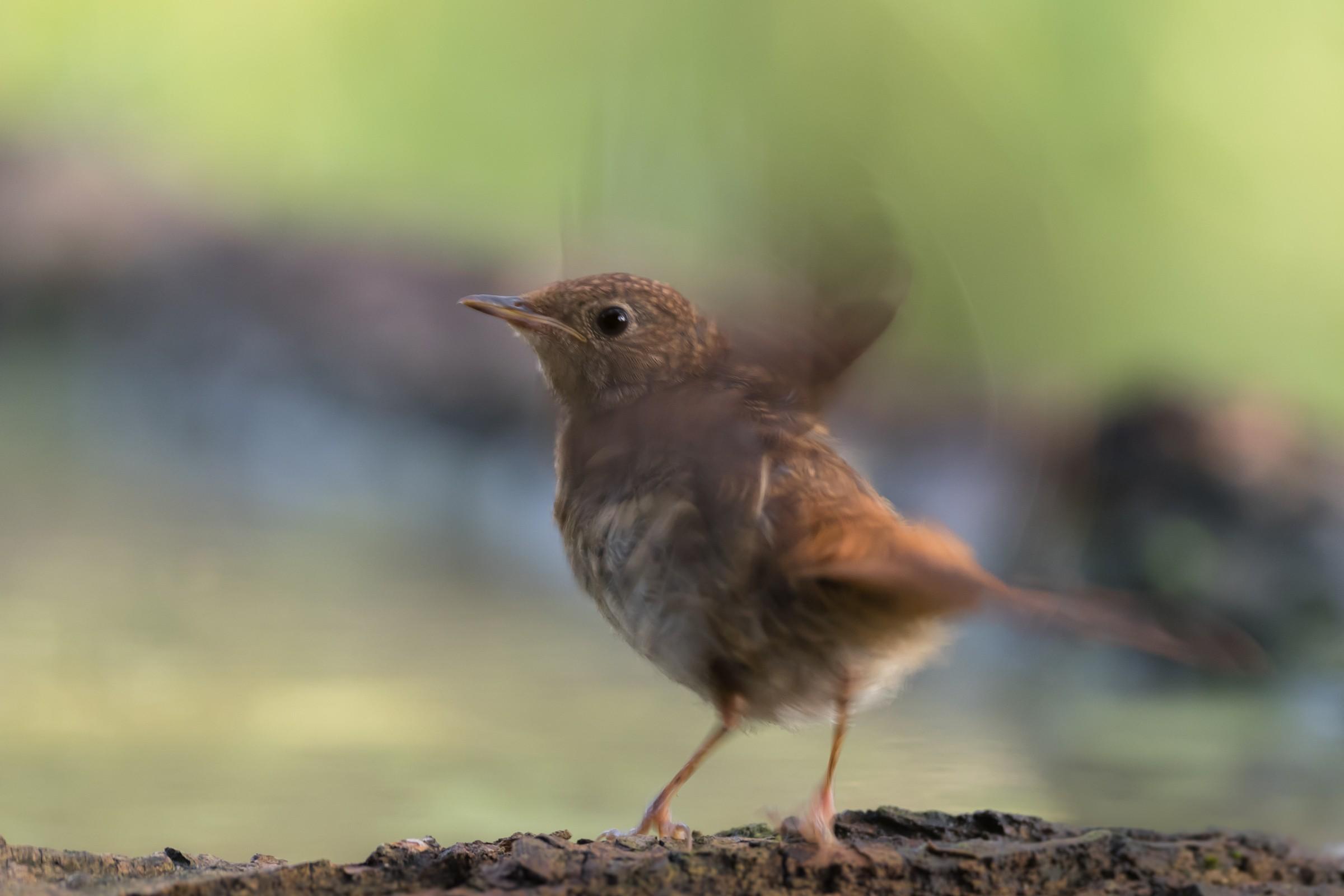 vogels bos 5114