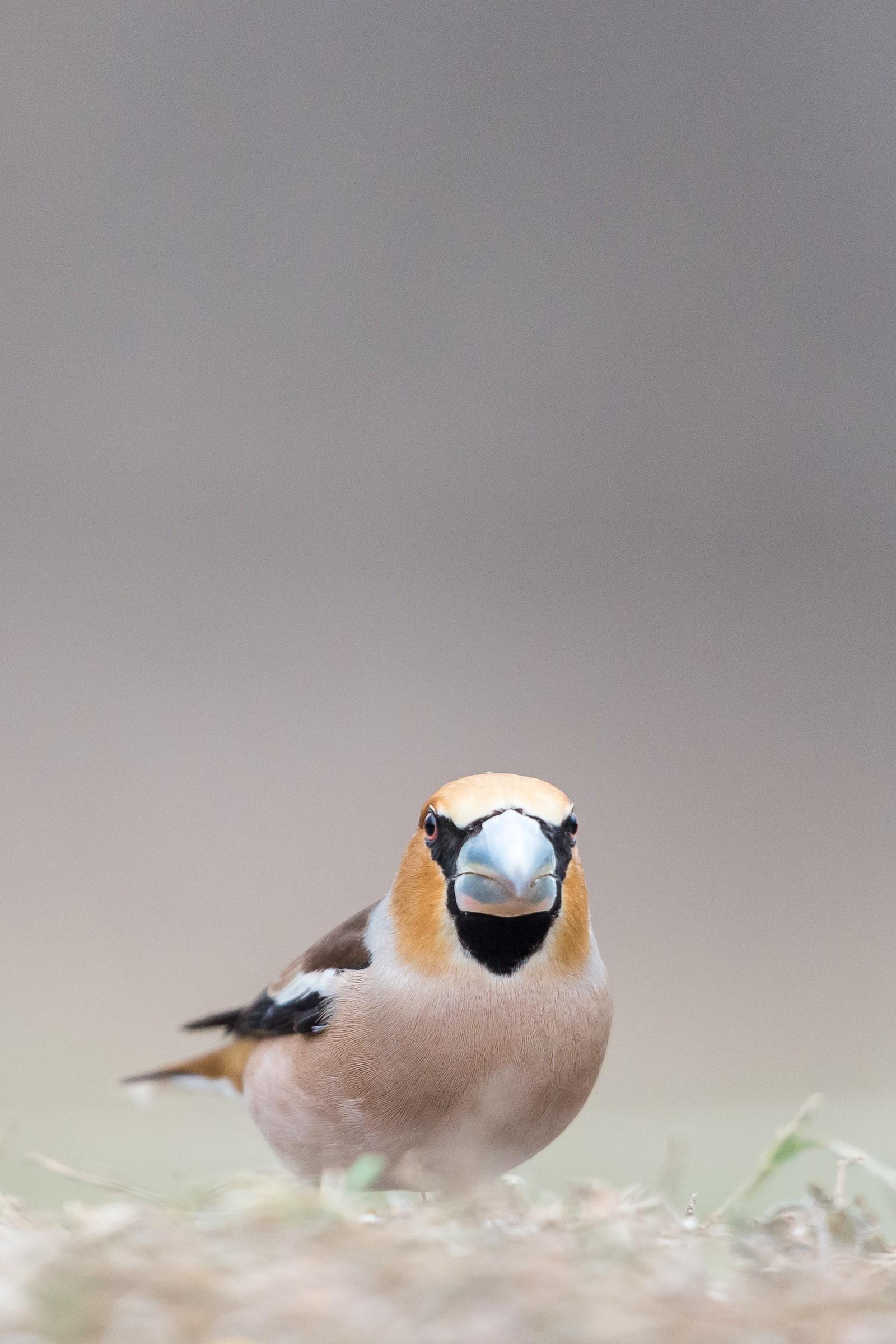 vogels bos 9267