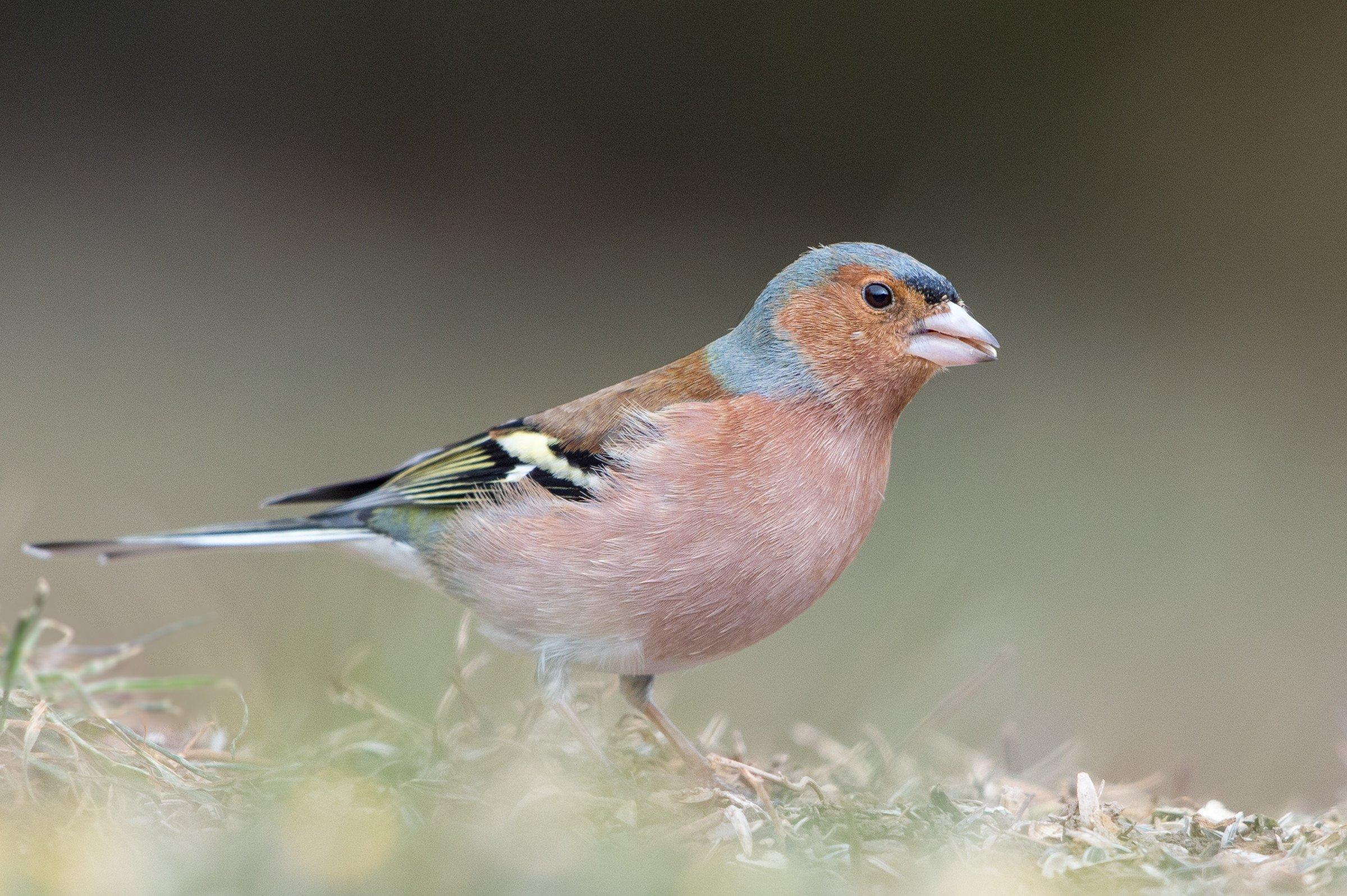 vogels bos 9490