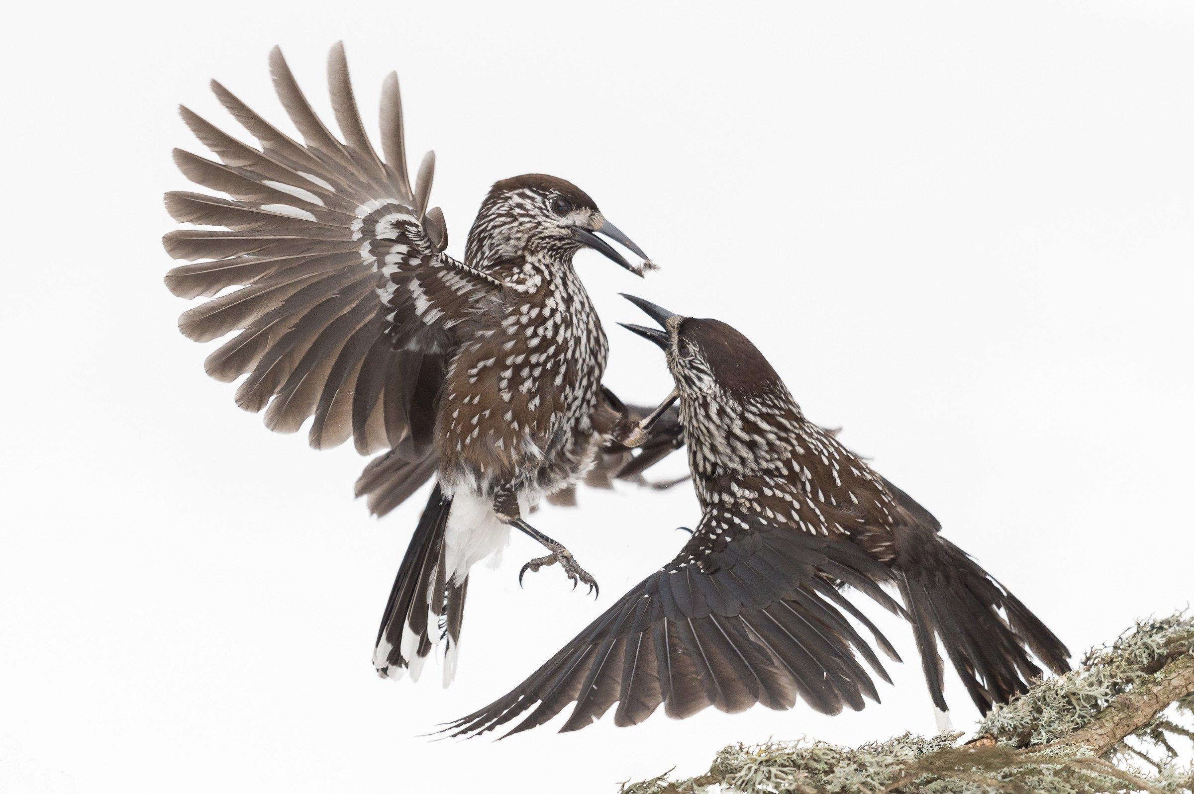 vogels bos 1413
