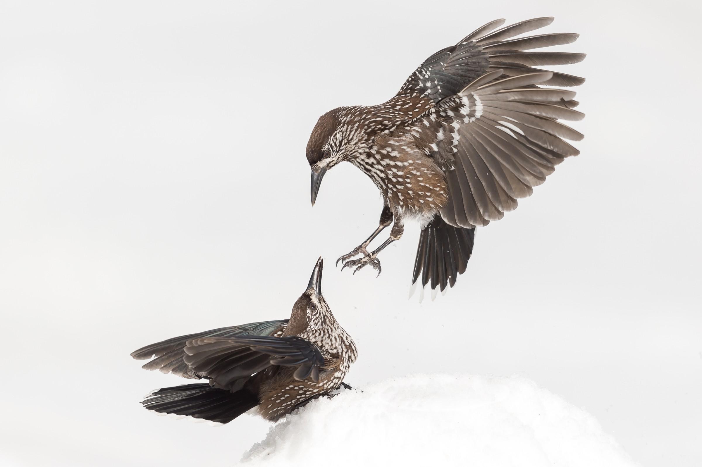 vogels bos 2329