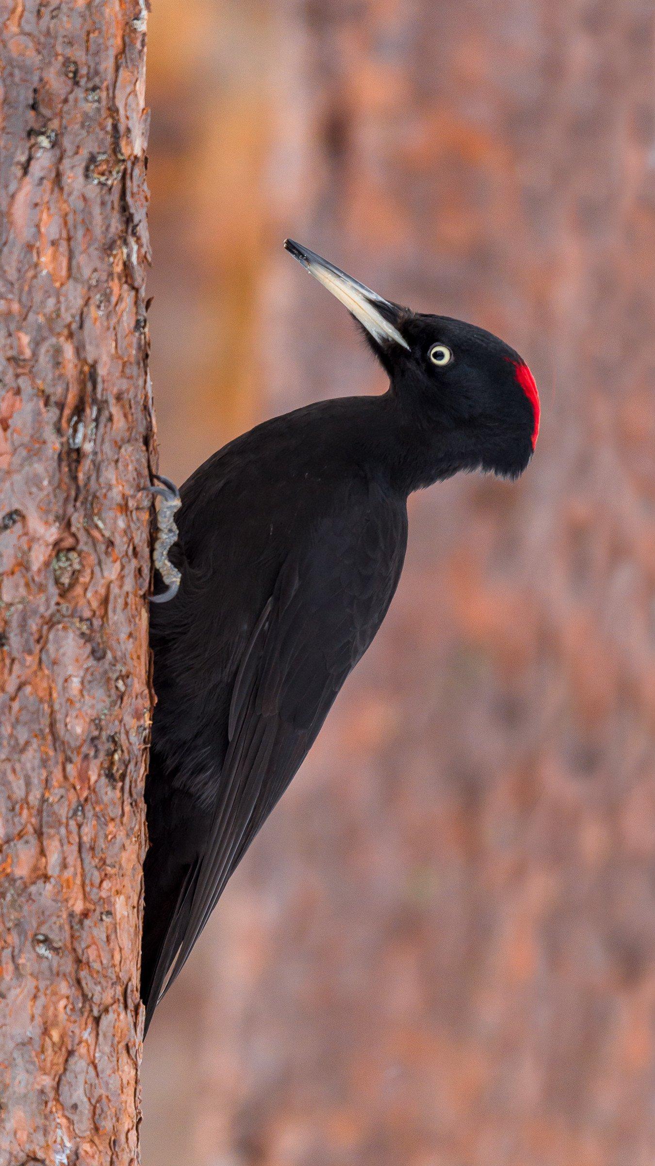 vogels bos 2560