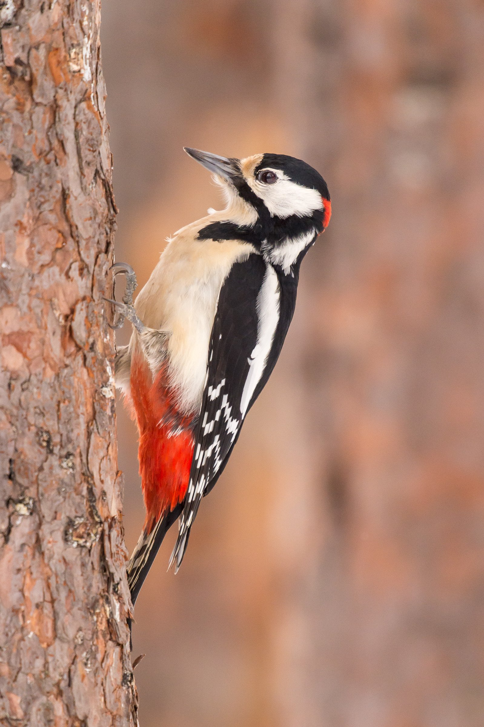 vogels bos 3380