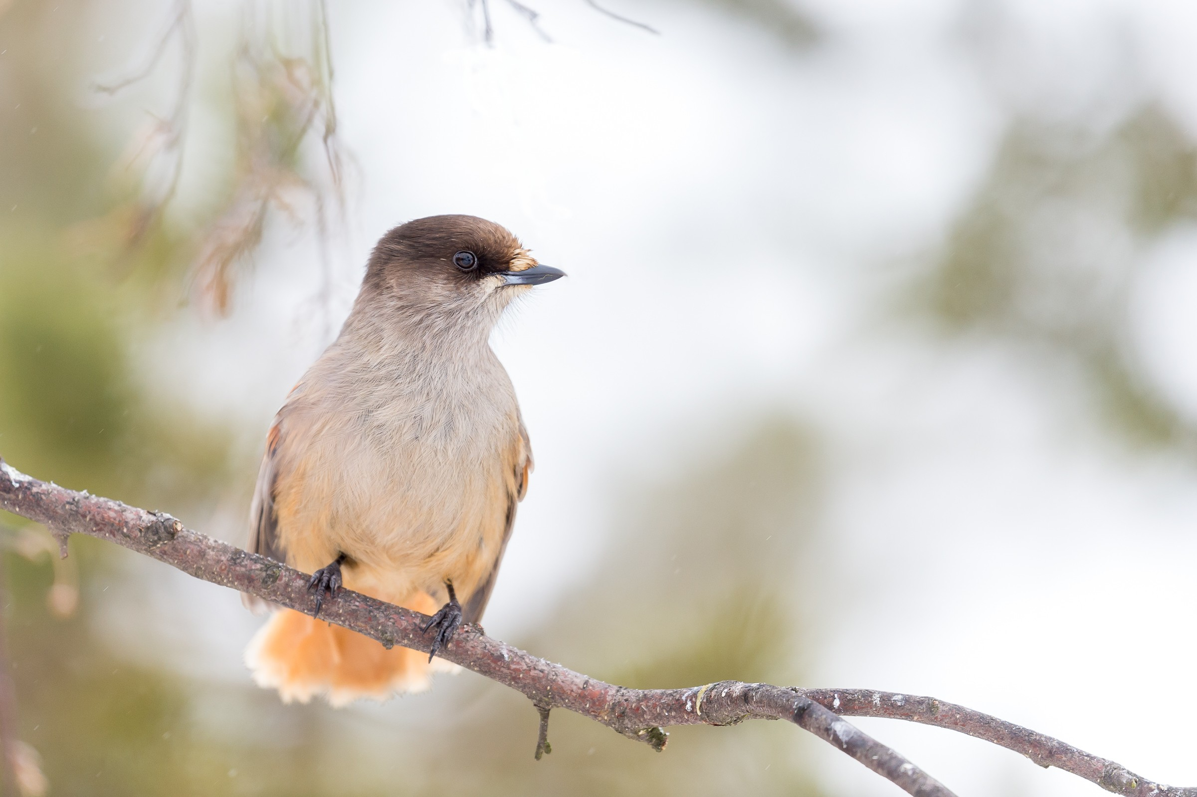 vogels bos 6210