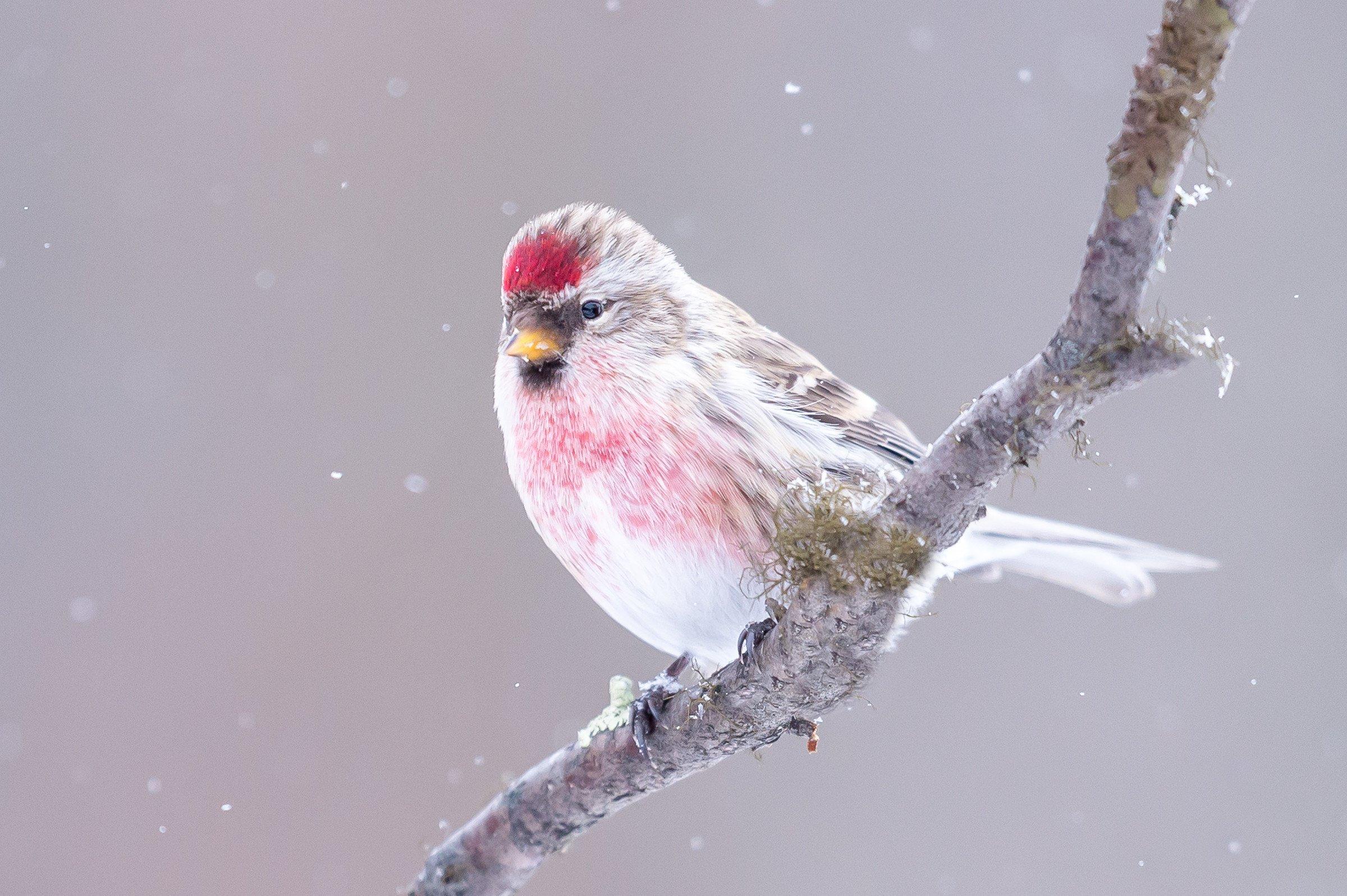 vogels bos 6293