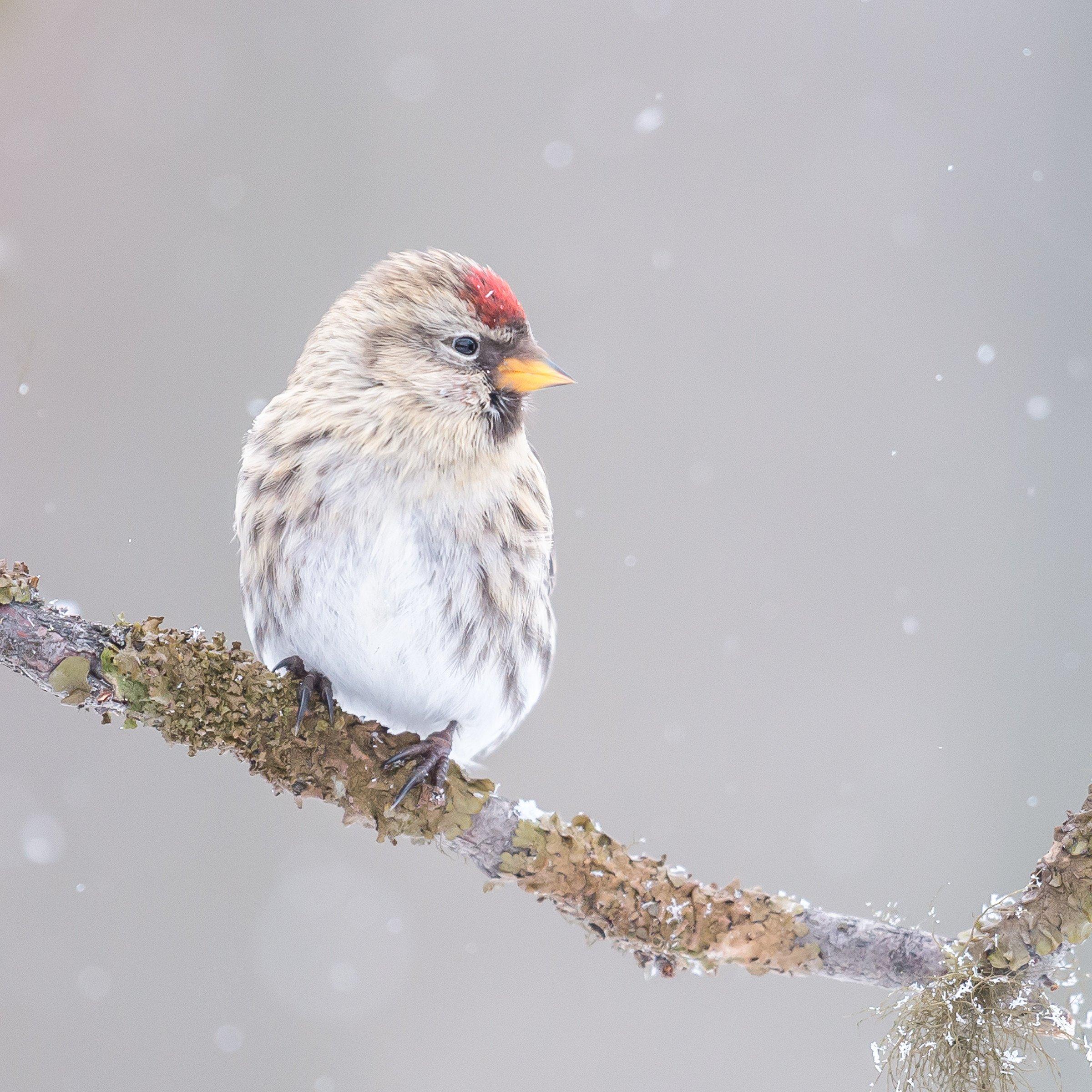 vogels bos 6344