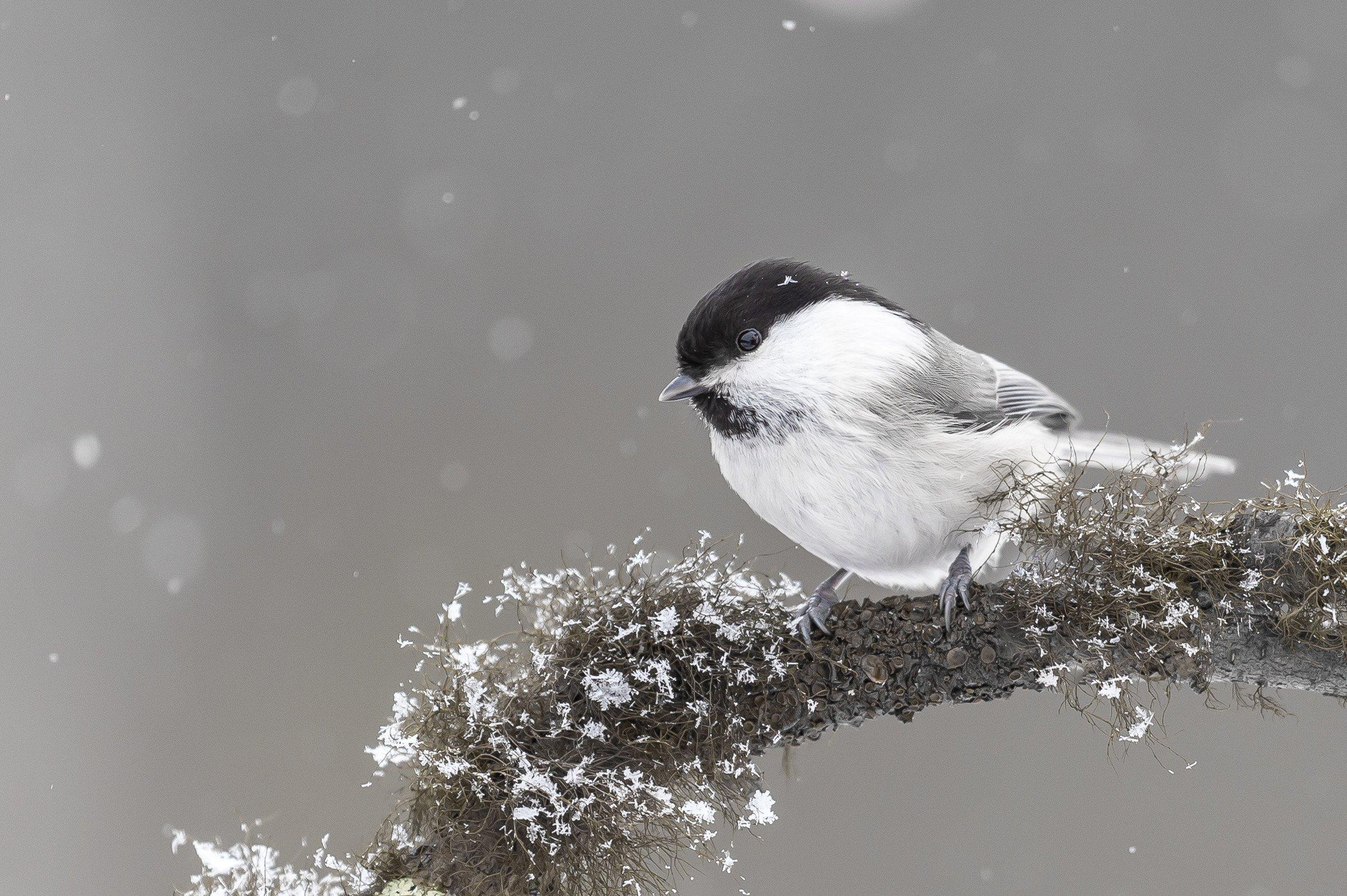 vogels bos 6368