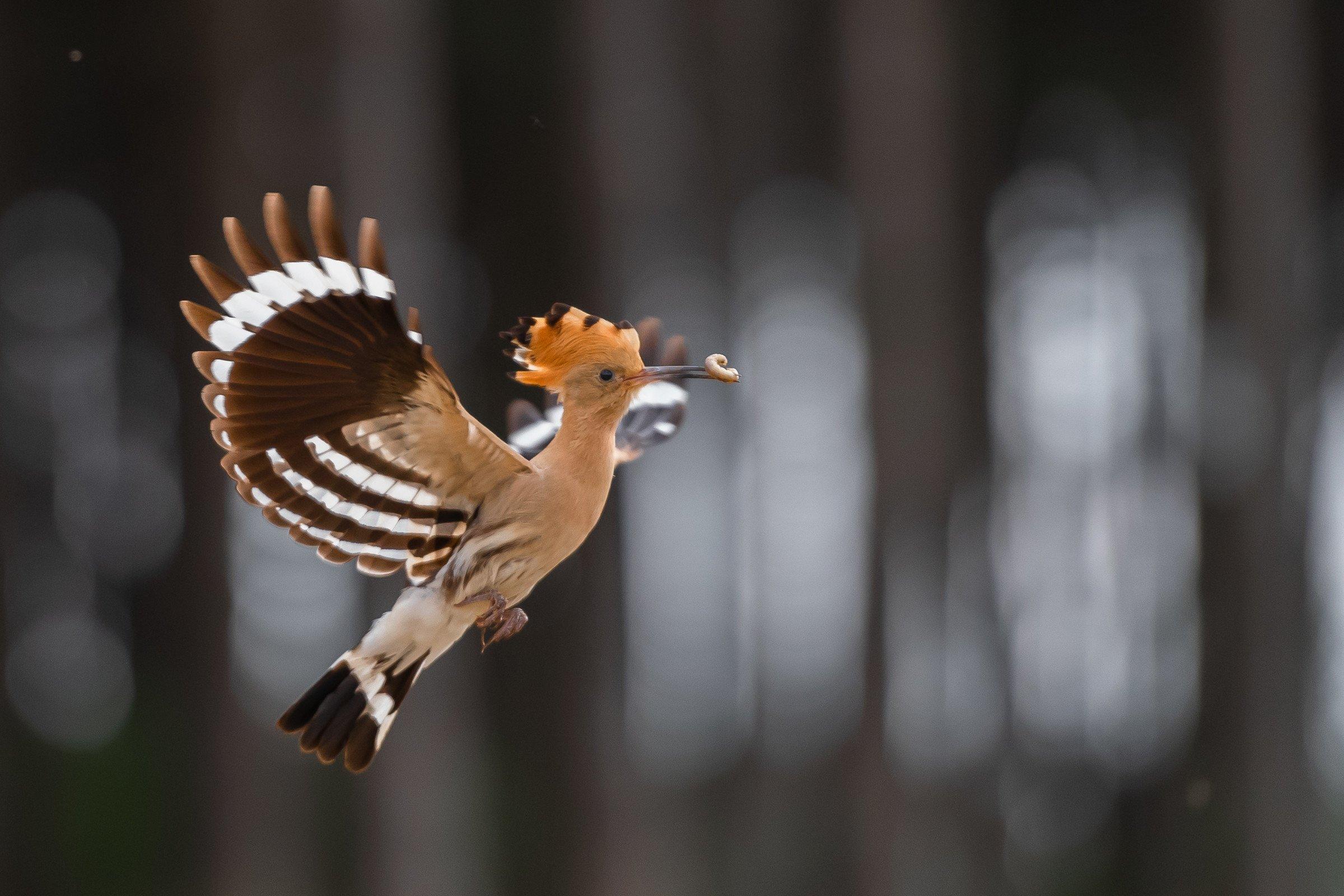 vogels bos 1105