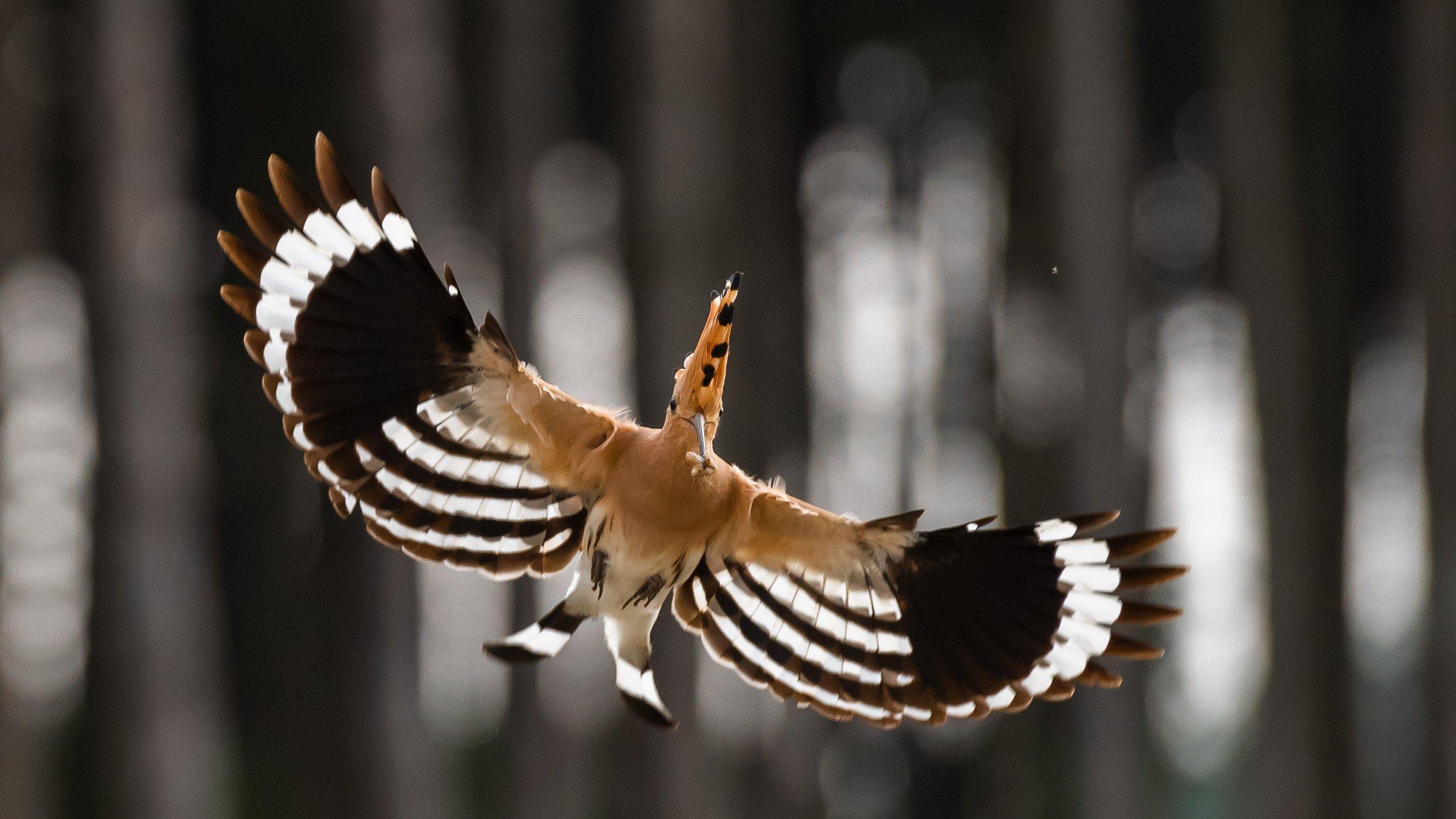 vogels bos 1324