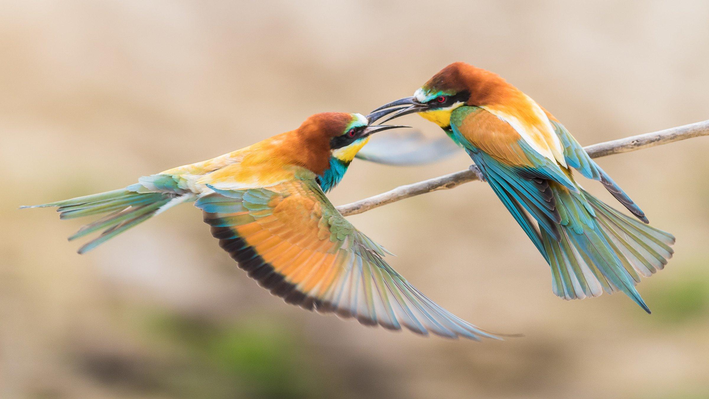 vogels bos 2