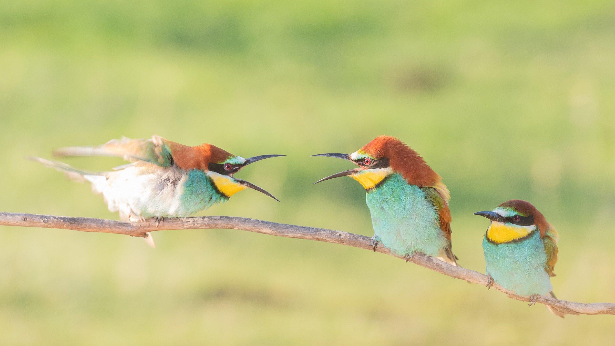 vogels bos 4611