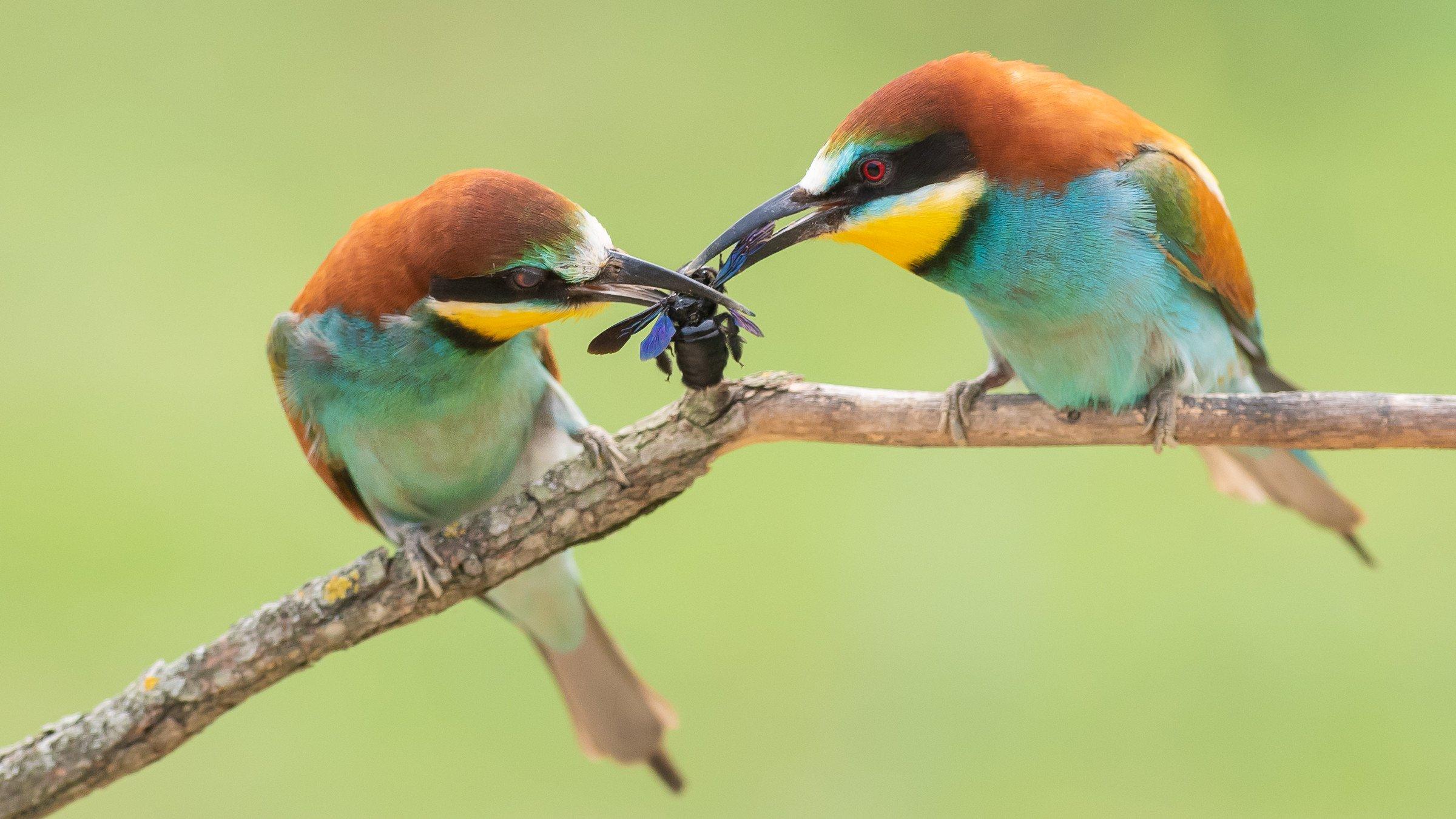 vogels bos 6141