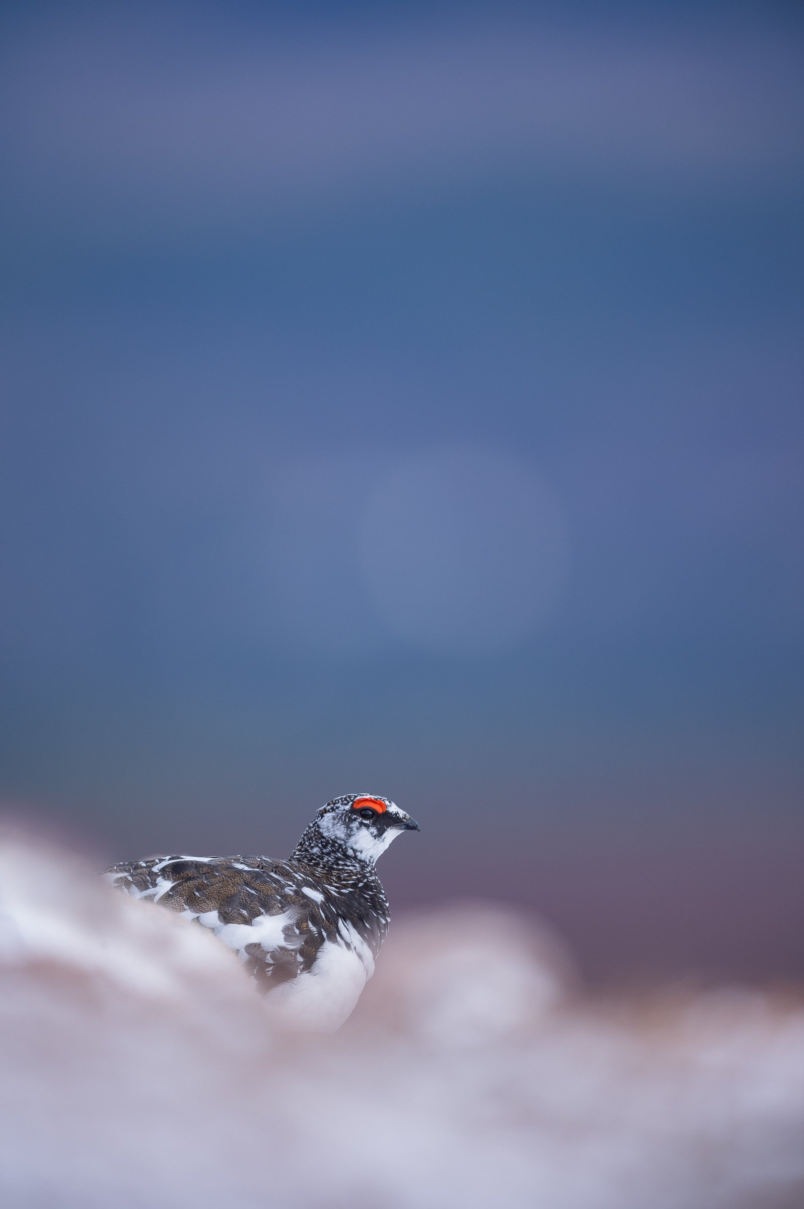 vogels veengebied 3045