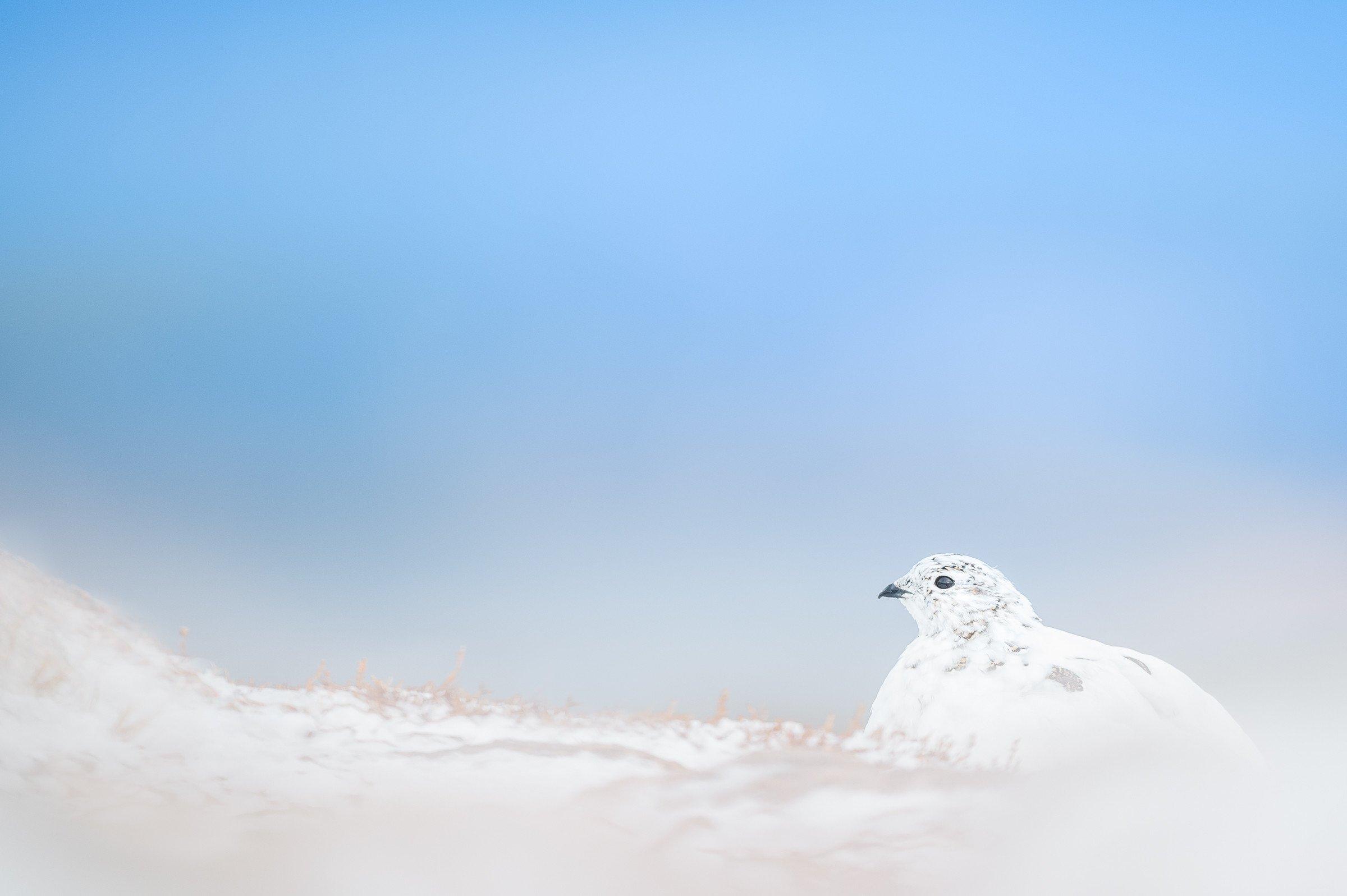 vogels veengebied 3134