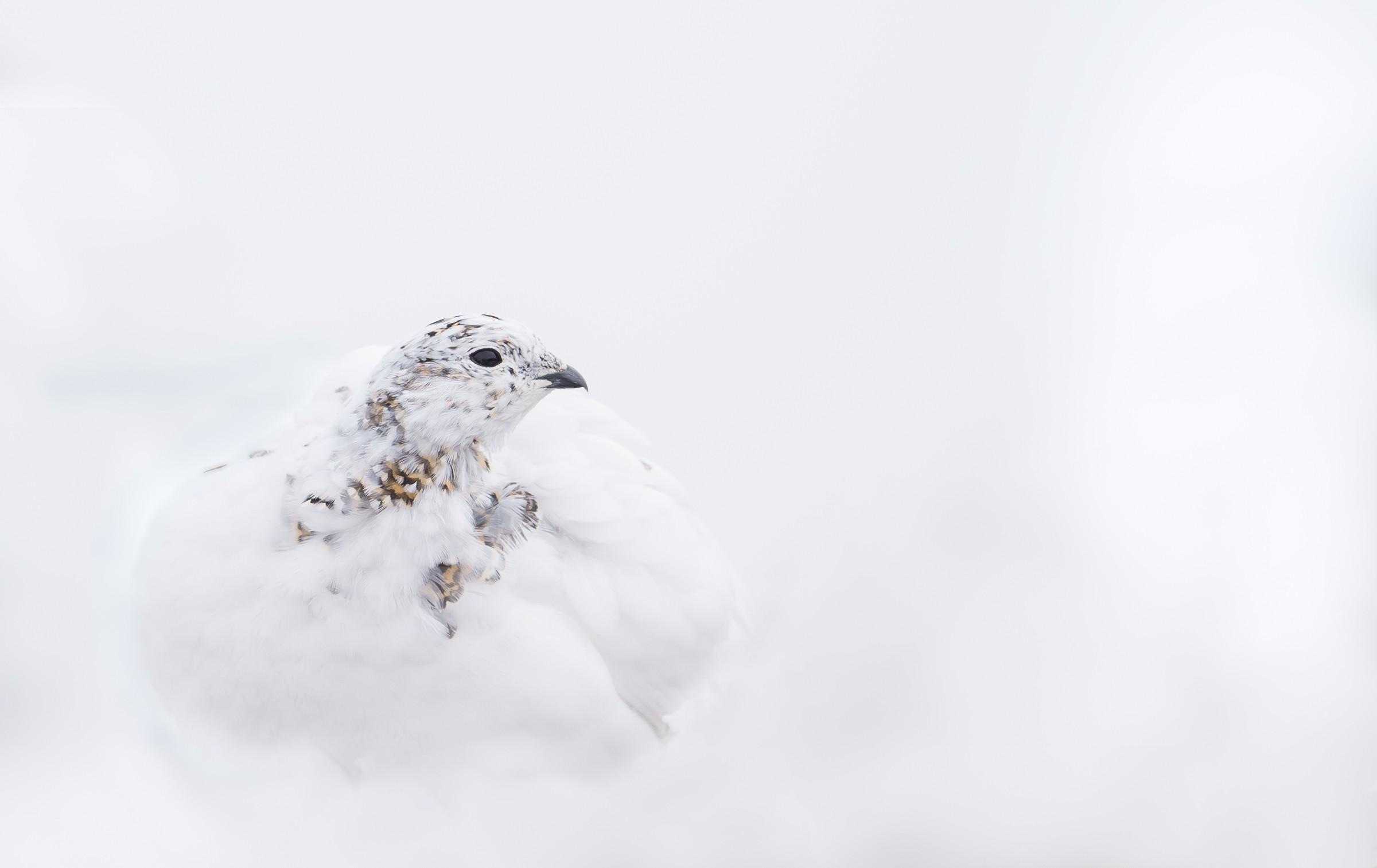 vogels veengebied 4433
