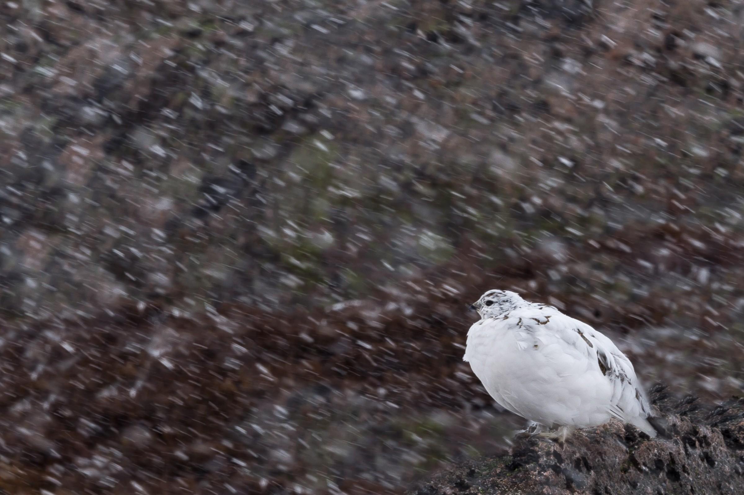vogels veengebied 5854