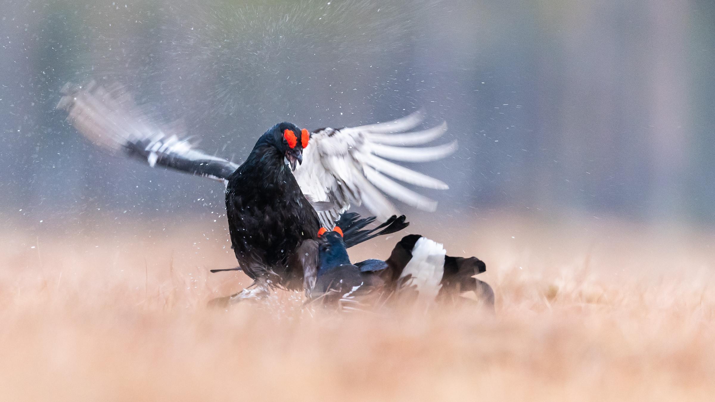 vogels veengebied 0488