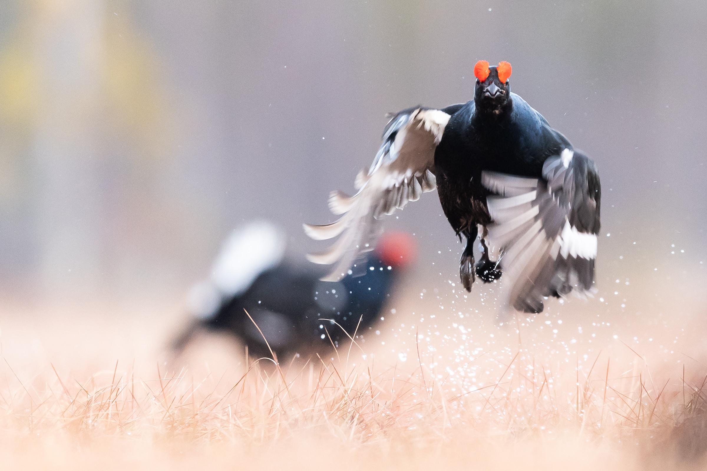 vogels veengebied 0741