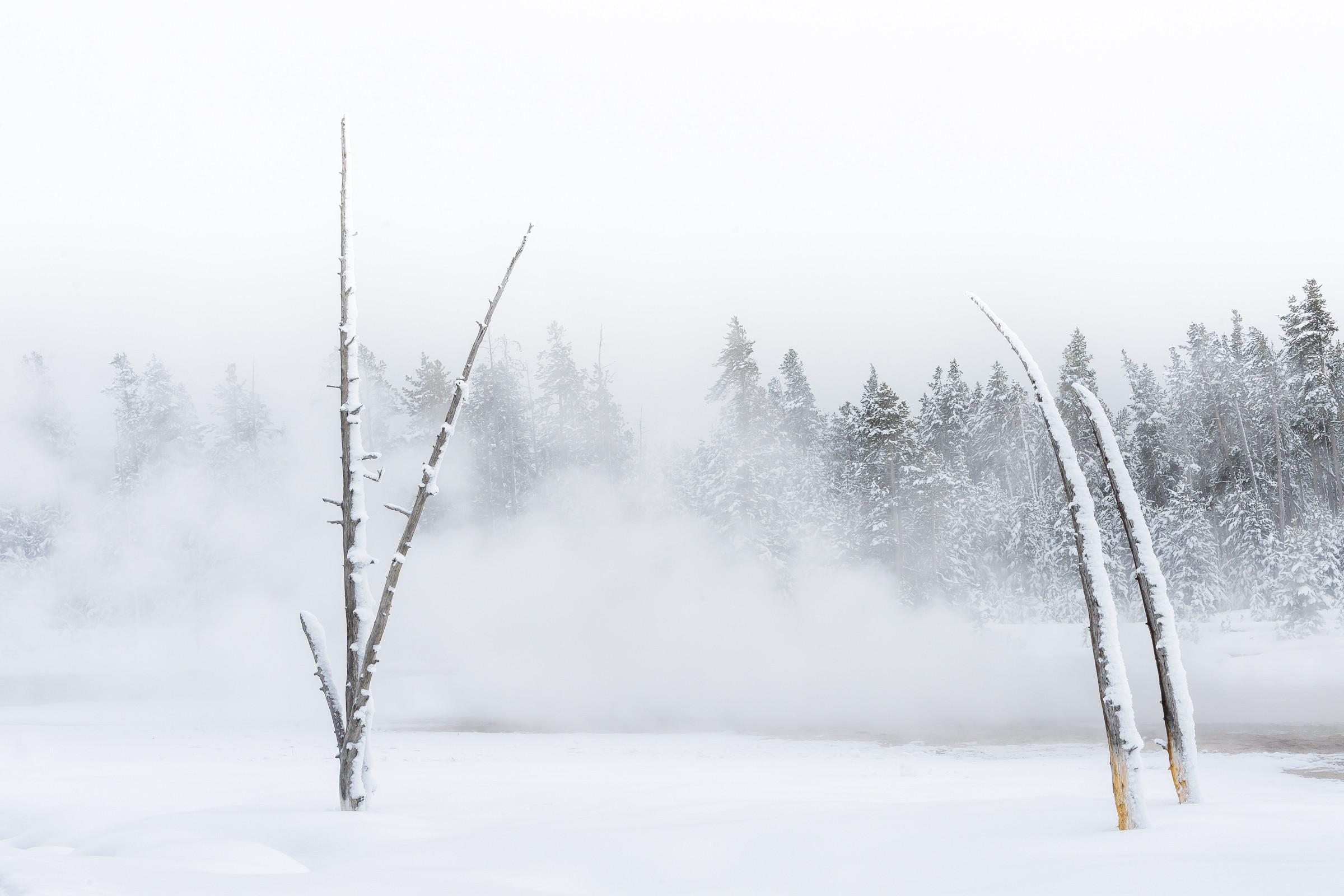 landschap Yellowstone 0265