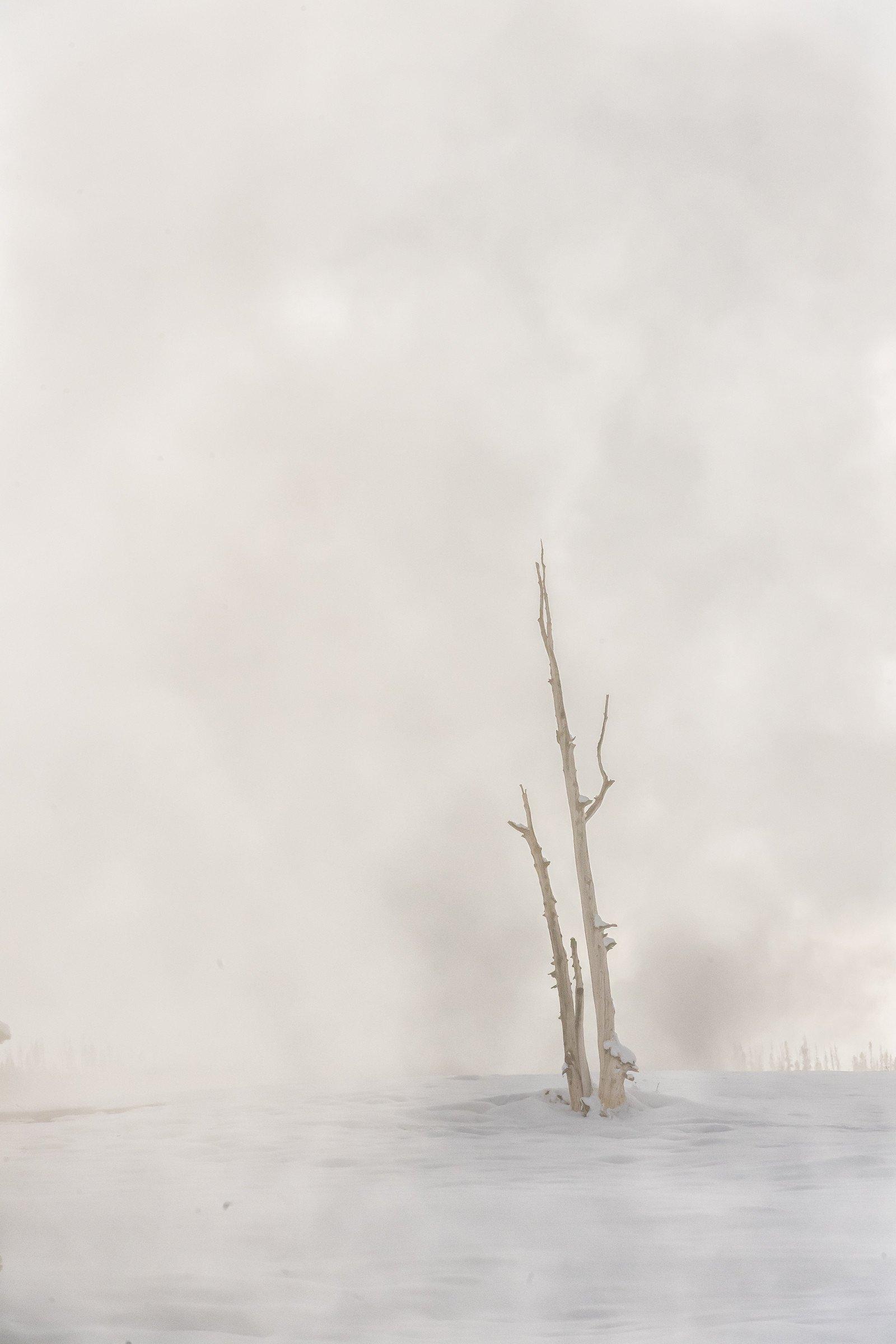 landschap Yellowstone 1217