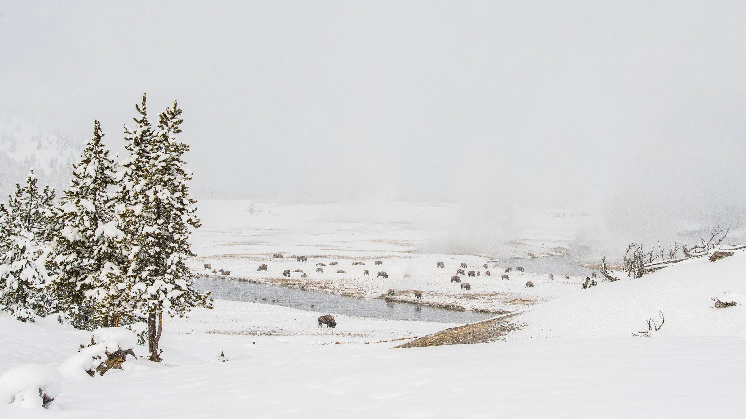 landschap Yellowstone 9802