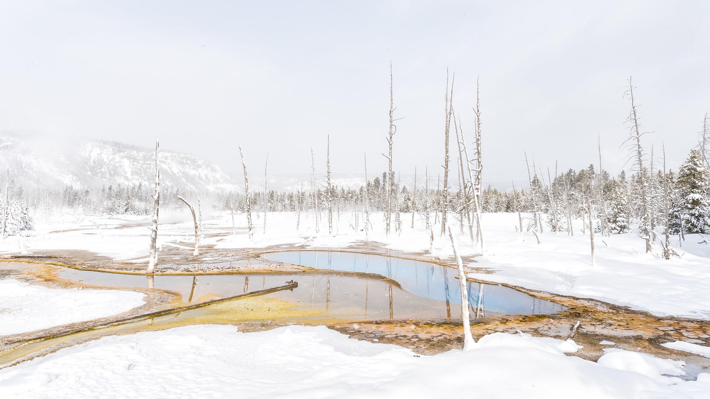 landschap Yellowstone 9821