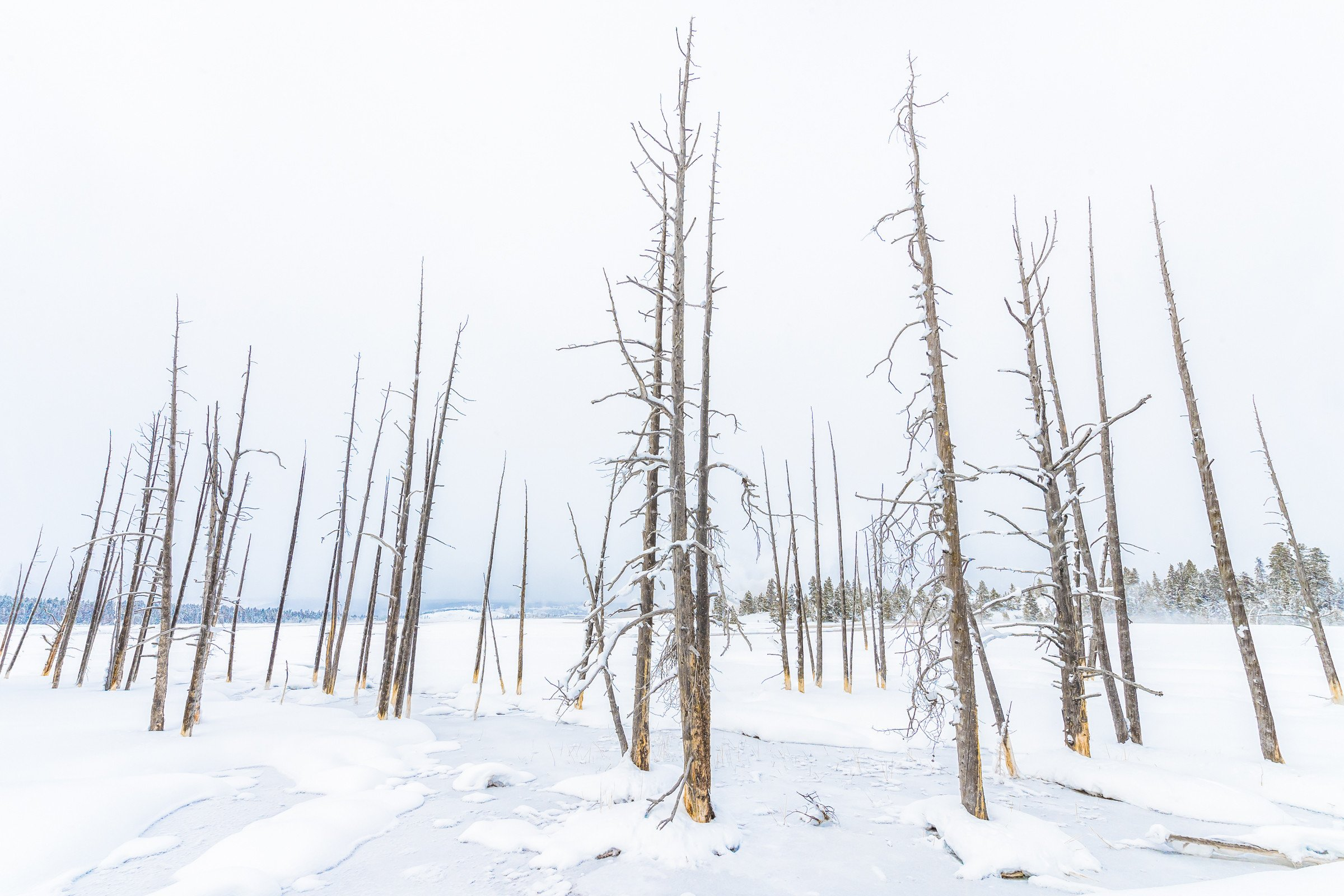 landschap Yellowstone 9996