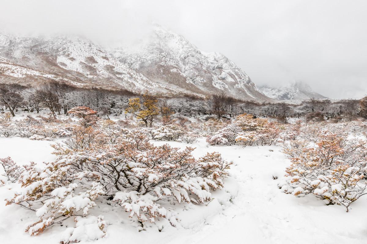 landschap Patagonie 5115
