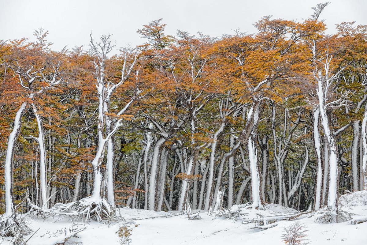landschap Patagonie 5290