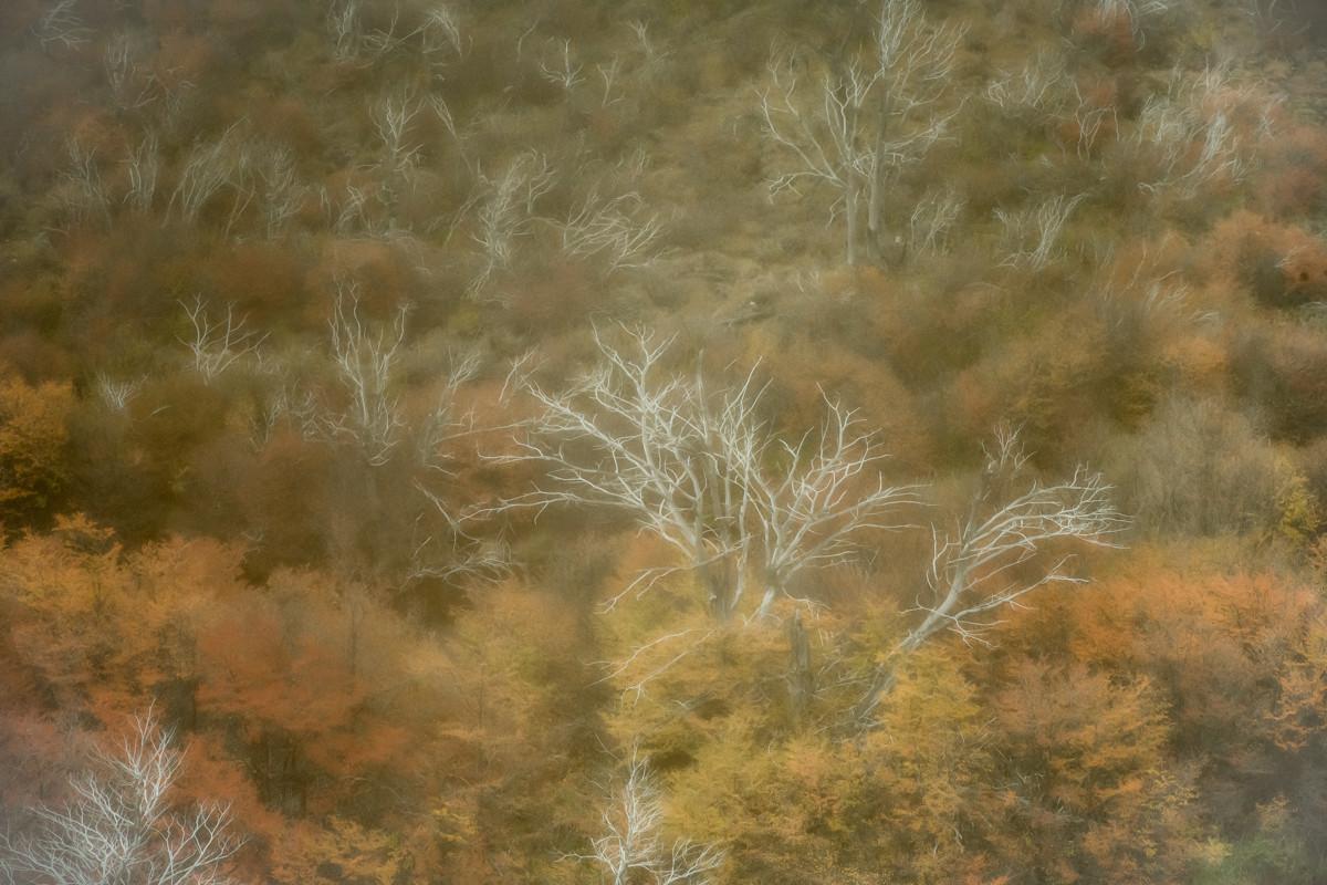 landschap Patagonie 6104