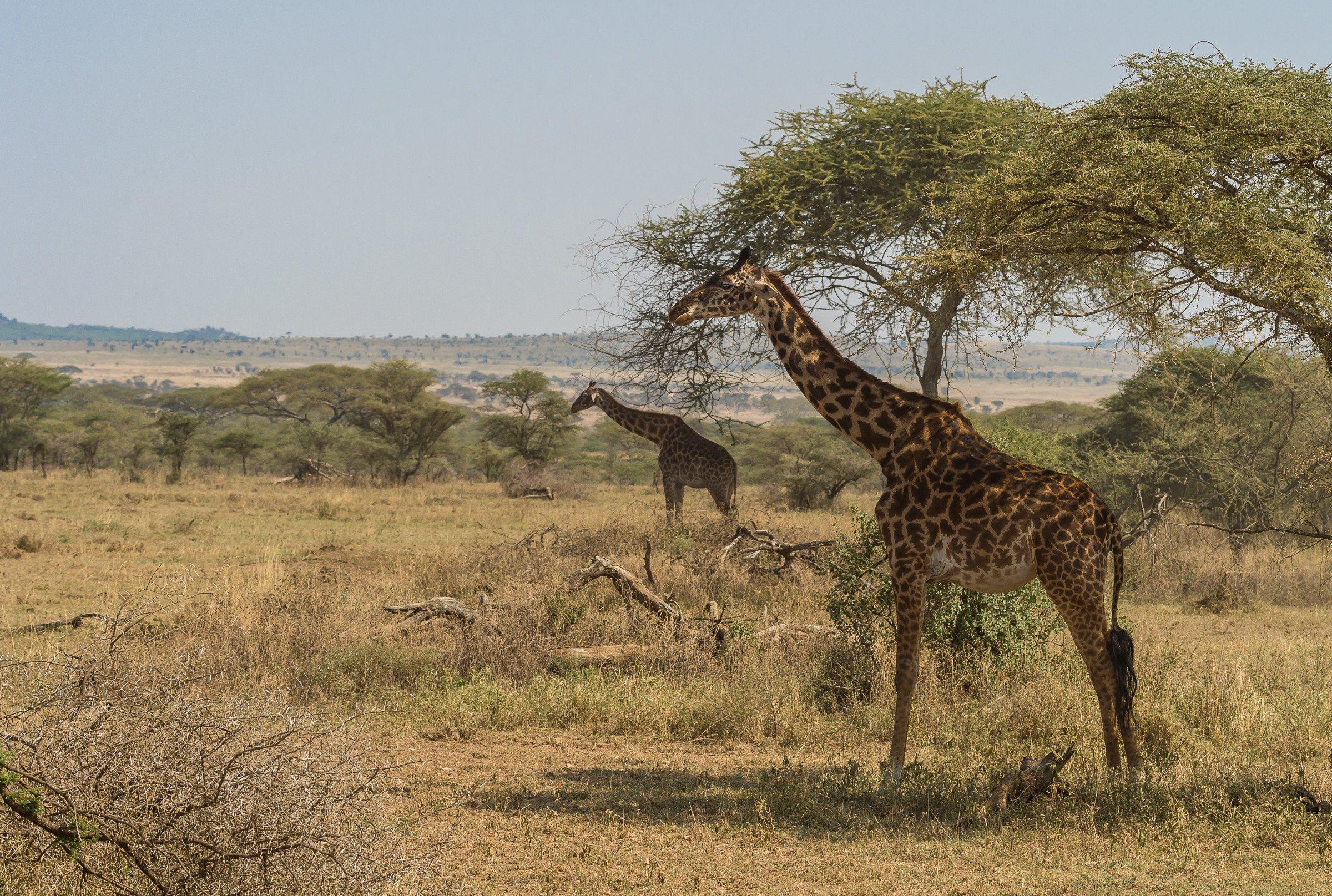 landschap africa 1327