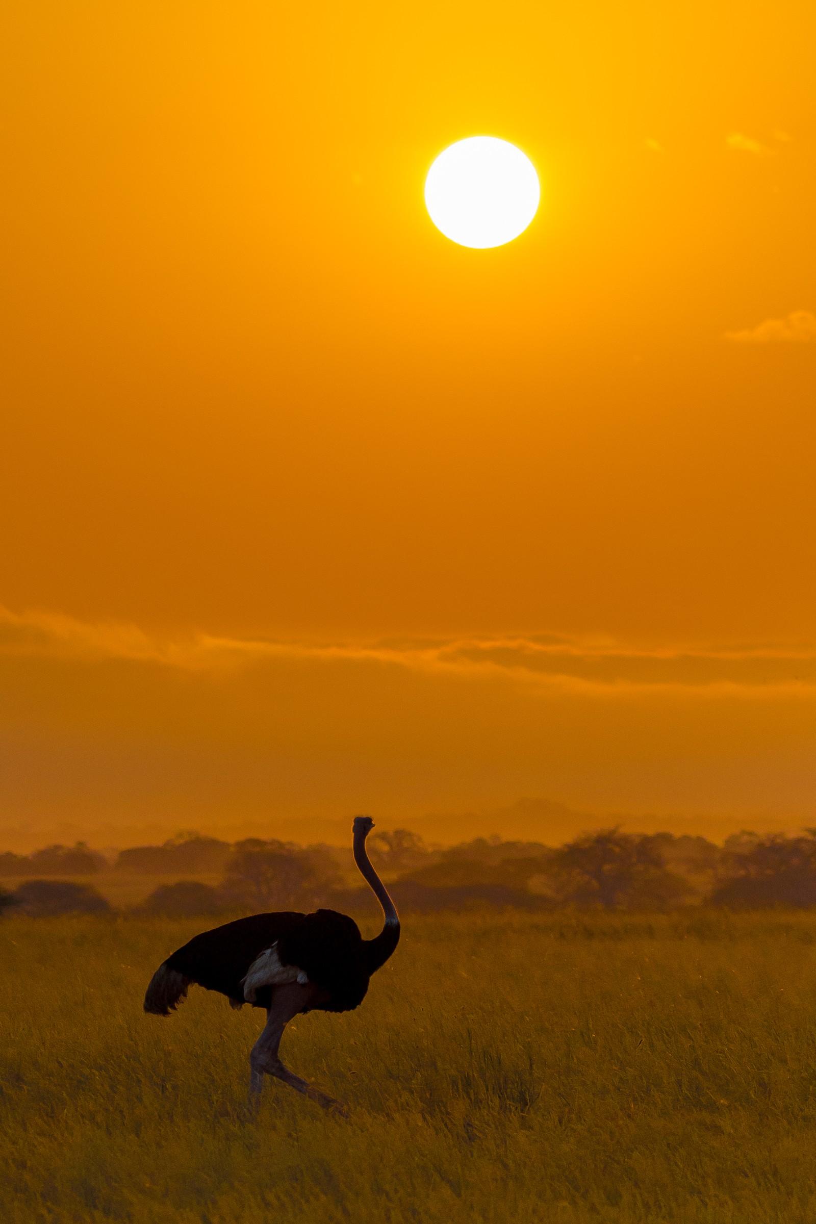 landschap africa 7415