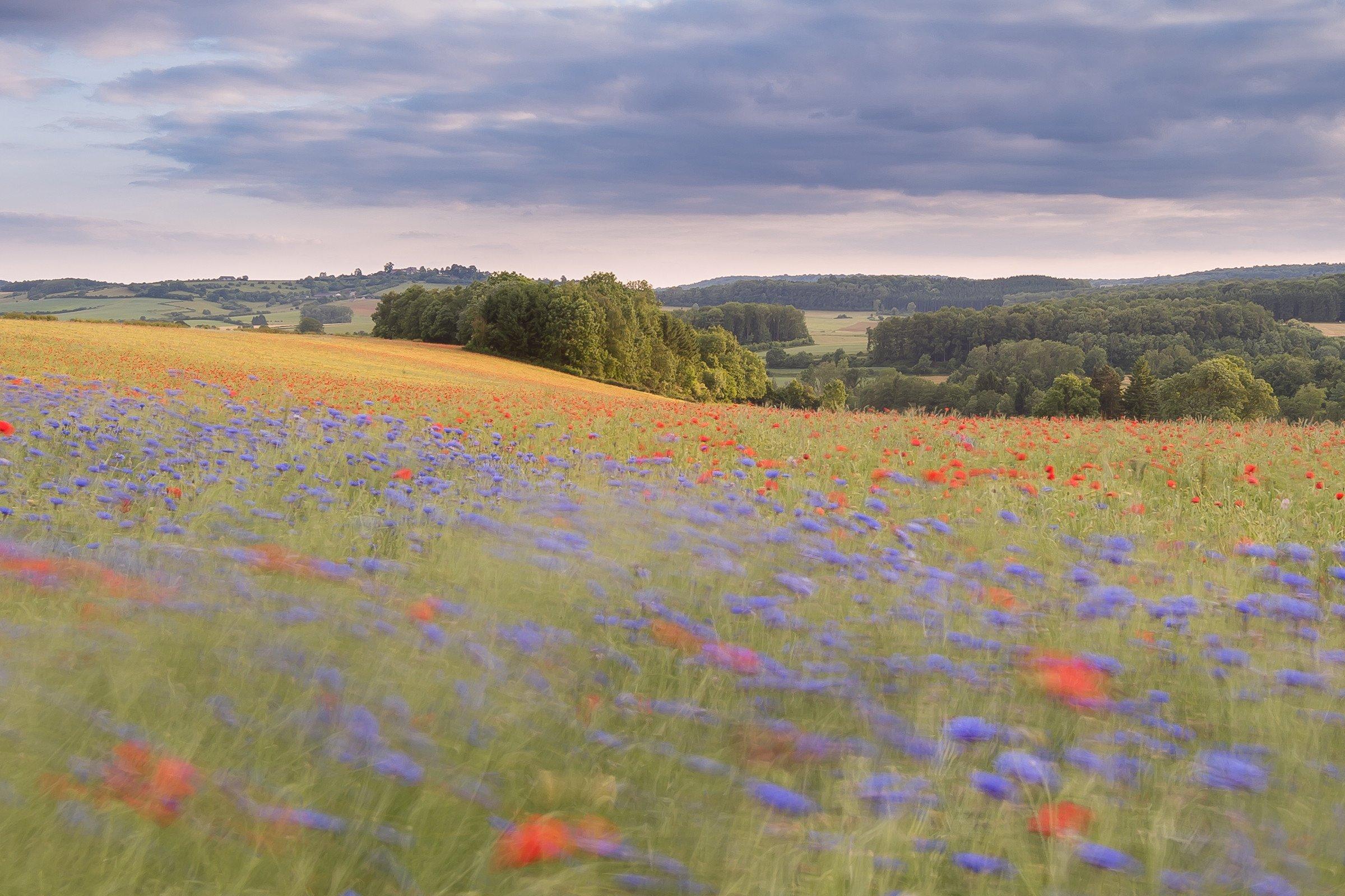 landschap europa 2949